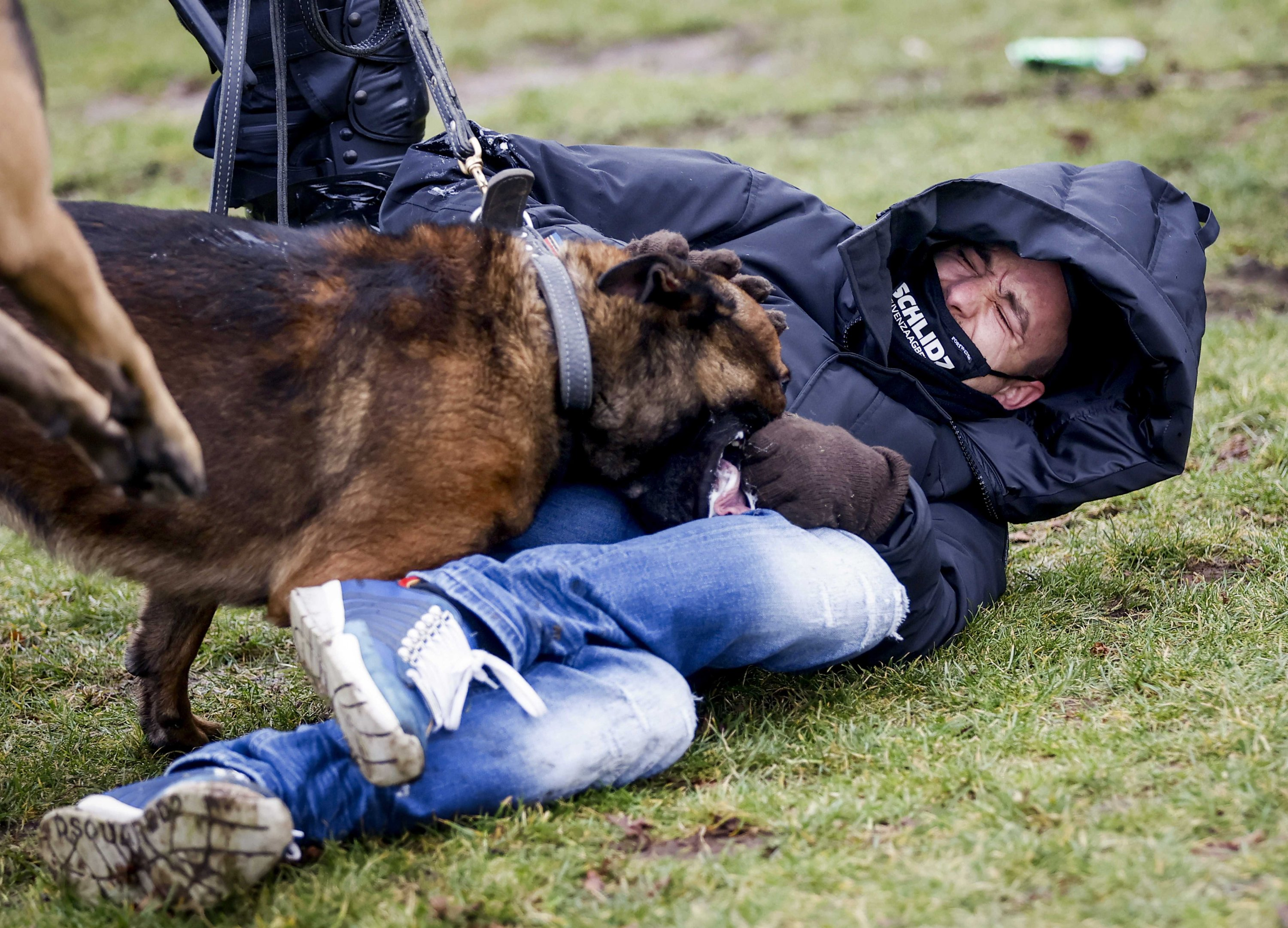 A demonstrator is attacked by a dog on the Museumplein, where the police broke up a demonstration against the current coronavirus measures, in Amsterdam, the Netherlands, Jan. 24, 2021. (EPA Photo)