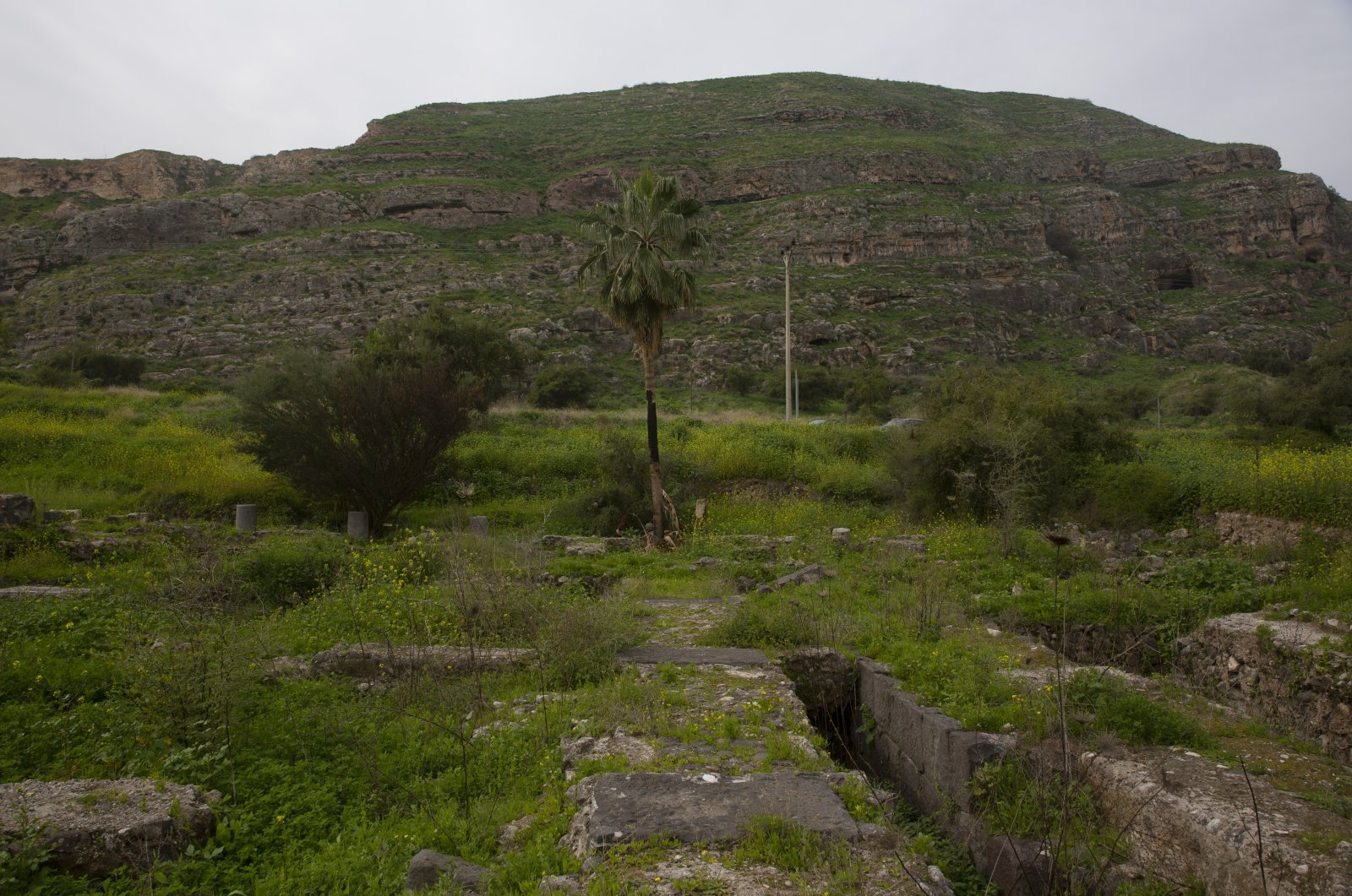 At the foot of Mount Bernice, stones from the Al-Juma (Friday) Mosque are visible through overgrown plants, in Tiberias, northern Israel, Jan. 27, 2021. Archaeologists said recent excavations in the ancient city of Tiberias have revealed the remnants of one of the earliest mosques in the Islamic world. The foundations of the Muslim house of worship date to the late seventh century. (AP Photo)