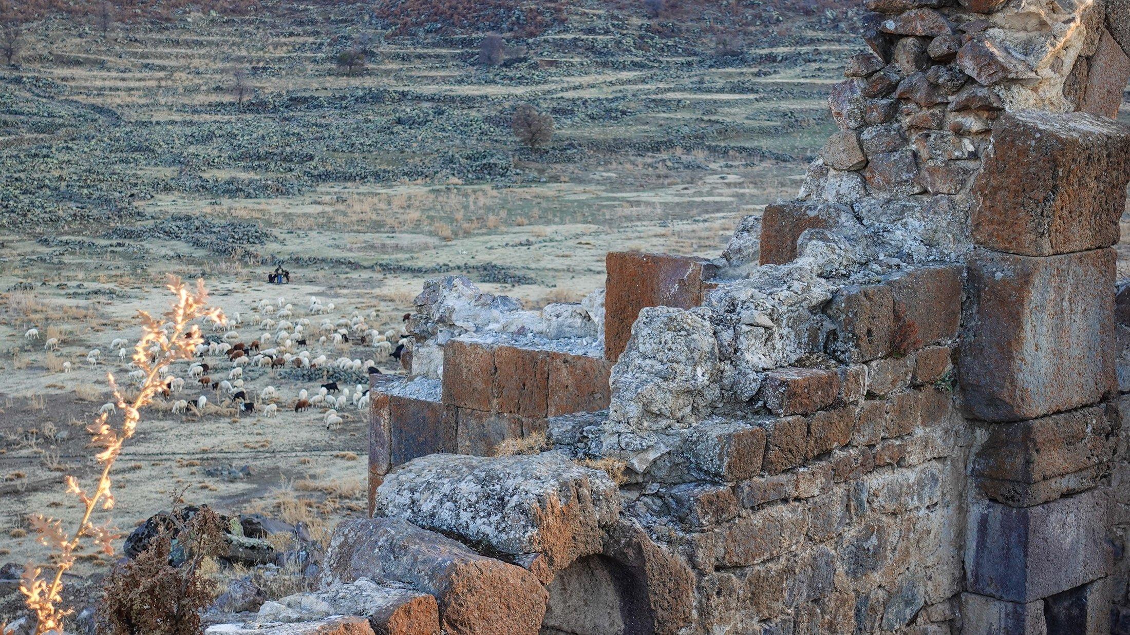 A flock of sheep behind the Vaulted Church at Mokissos. (Photo by Argun Konuk)