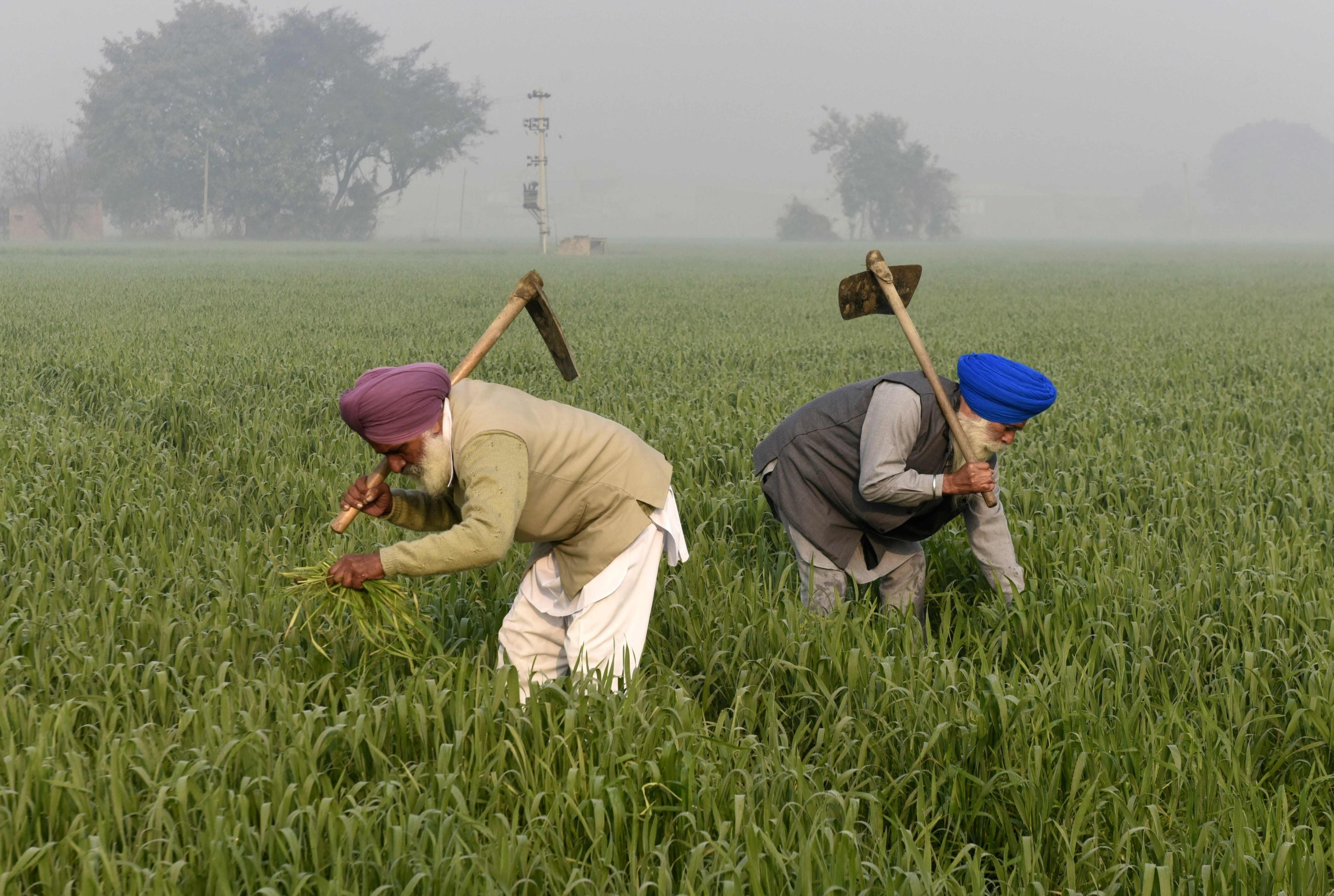 Farmers work in a field on the outskirts of Amritsar, India, Feb. 1, 2021. (AFP Photo)