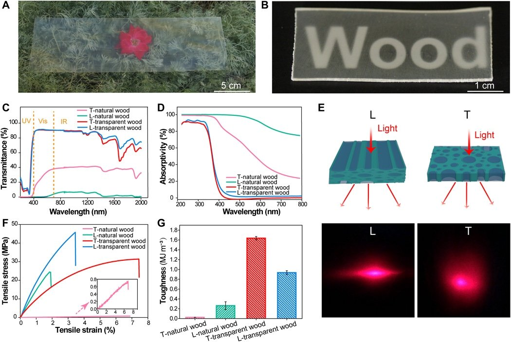 Fig. 3 The optical and mechanical properties of the natural wood and transparent wood. (Photo credit: Qinqin Xia, University of Maryland, College Park.)