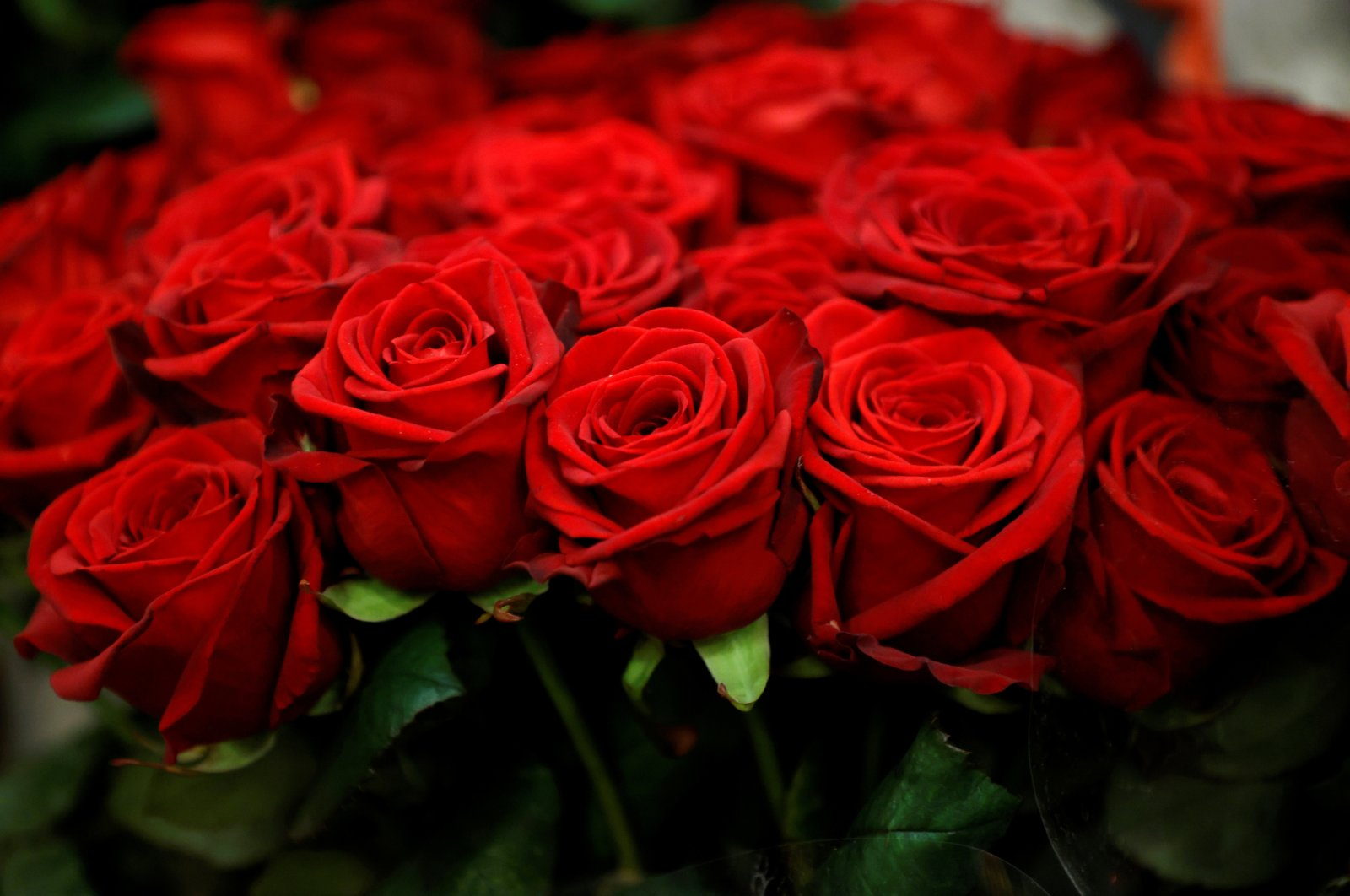 Red roses are displayed in a flower shop ahead of Valentine's Day in Paris, France, Feb. 12, 2021. (Reuters Photo)