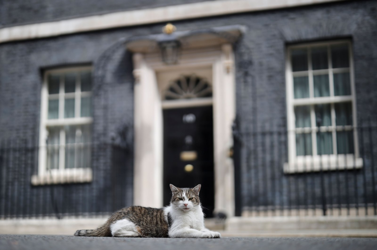 In this file photo Larry, Britain's official Chief Mouser lies outside 10 Downing Street in London, the U.K., July 10, 2019 (AFP)