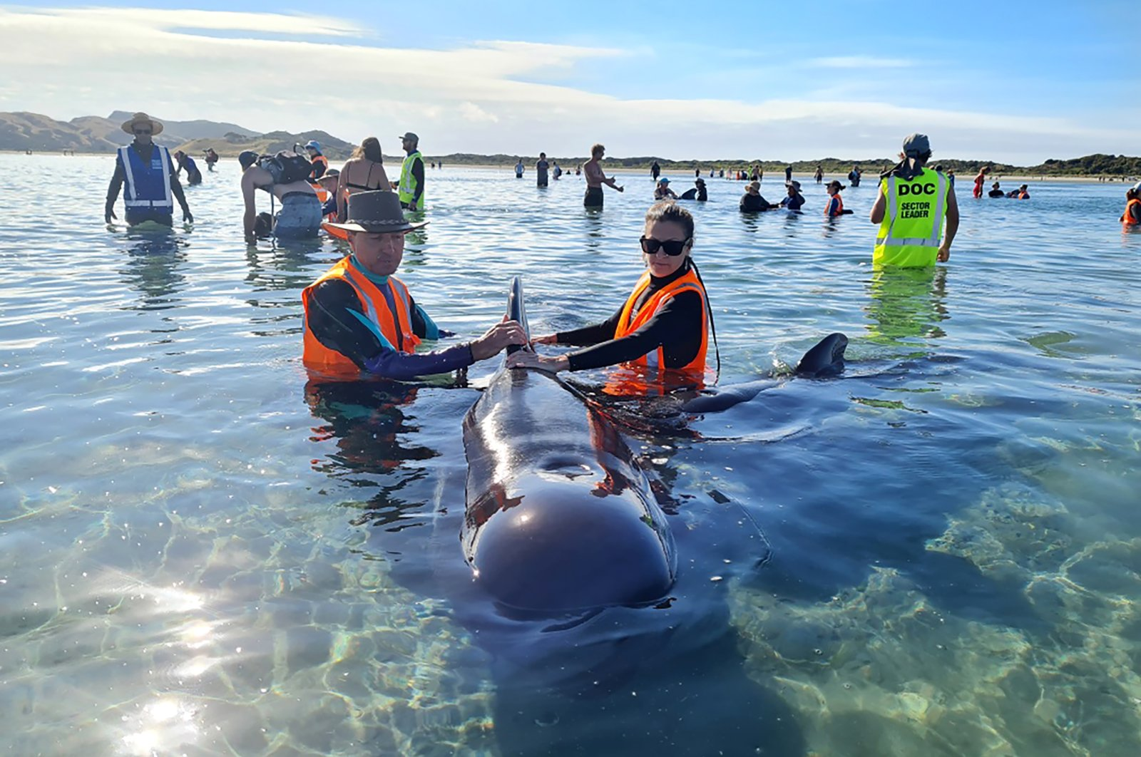 Rescuers work to save pilot whales beached at Farewell Spit at the top of the South Island of New Zealand, Feb. 22, 2021. (Project Jonah via AP)