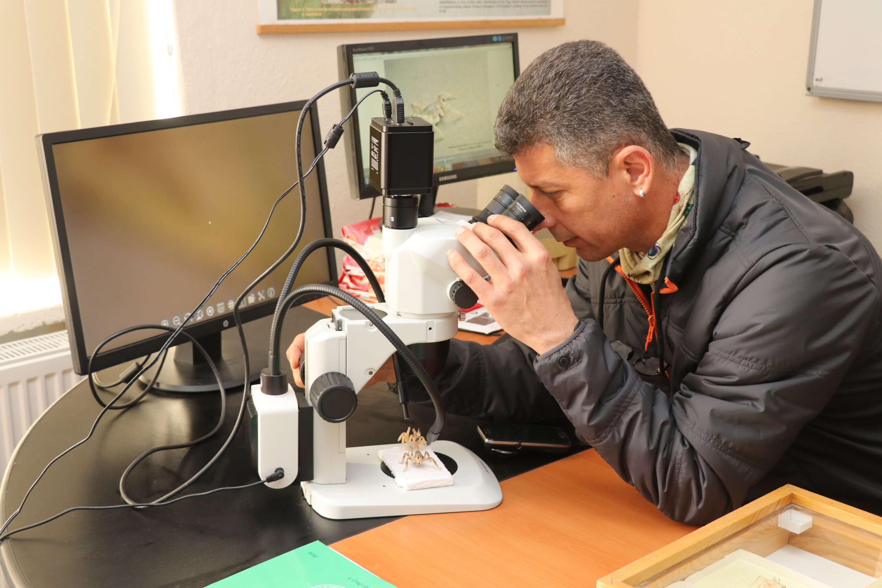 Professor Gökhan Aydın inspects a dune cricket with a microscope at the Isparta University of Applied Sciences, in Isparta, western Turkey, Feb. 23, 2021. (AA Photo)