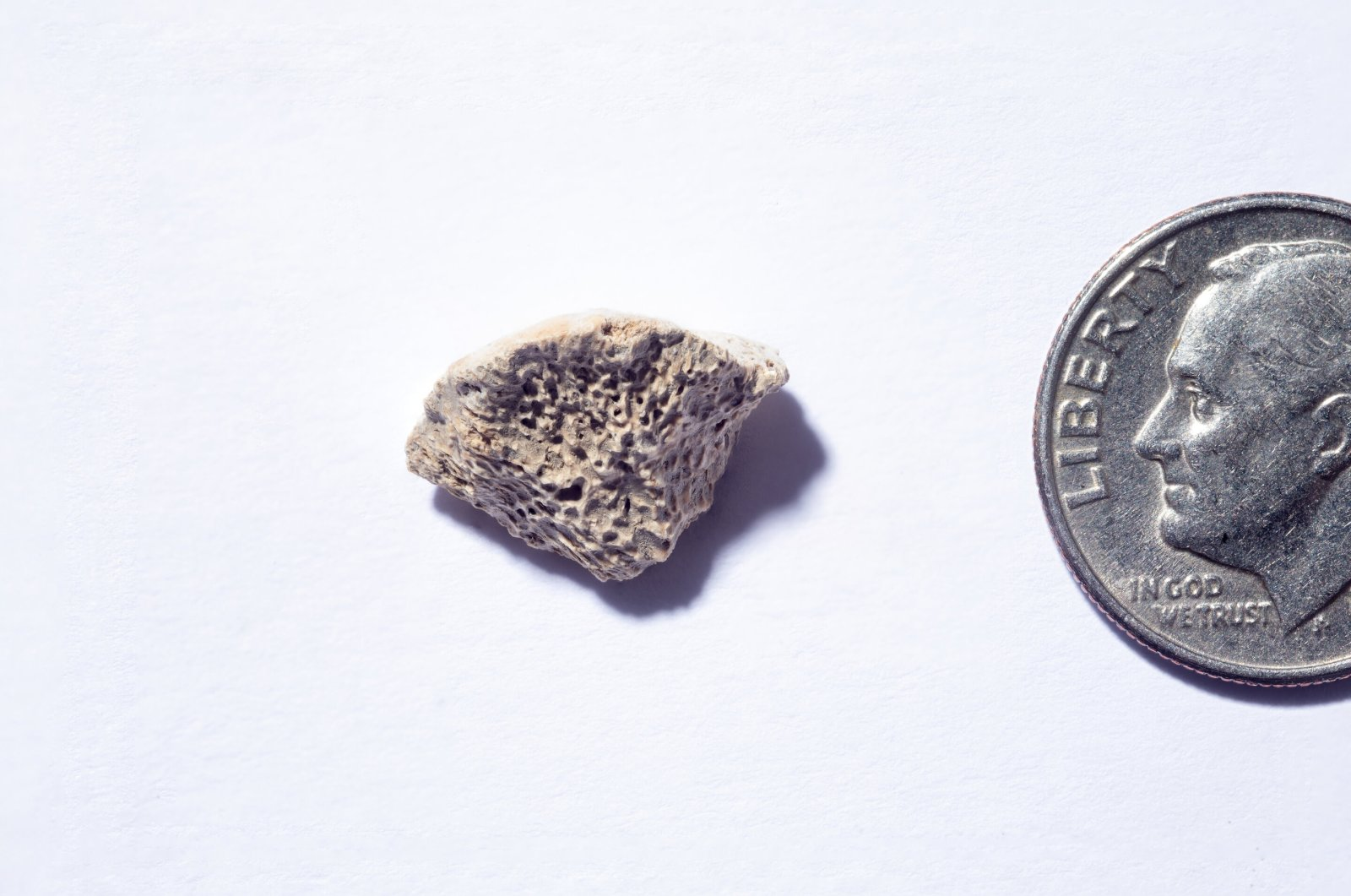The bone fragment, a piece of femur smaller than a nickel, belongs to a dog that lived more than 10,000 years ago. (Credit: Douglas Levere / University at Buffalo)
