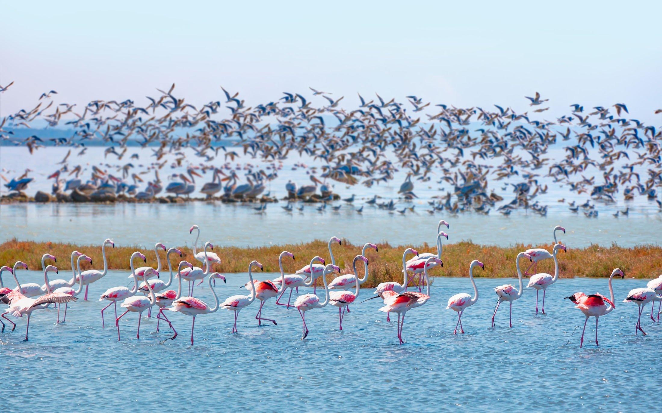 Türkiye'nin kuzeybatısındaki Balzac bölgesindeki Manyas Kuş Cenneti Milli Parkı binlerce göçmen kuşa ev sahipliği yapıyor.  (Shutterstock fotoğrafı)
