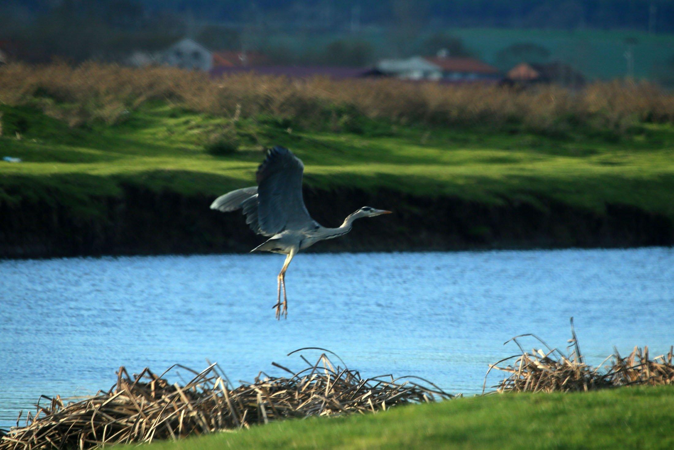 Kuzeydeki Samson eyaletinde bulunan Kosalarma Deltası Kuş Cenneti, göçmen kuşların gelişiyle rengarenk bir yer olacak.  (AA fotoğraf)
