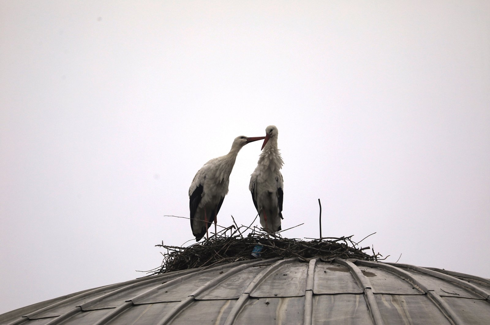 Two storks in Bingöl, southeastern Turkey have made the Sanayi Sitesi Mosque their home for these past four years. (AA Photo)