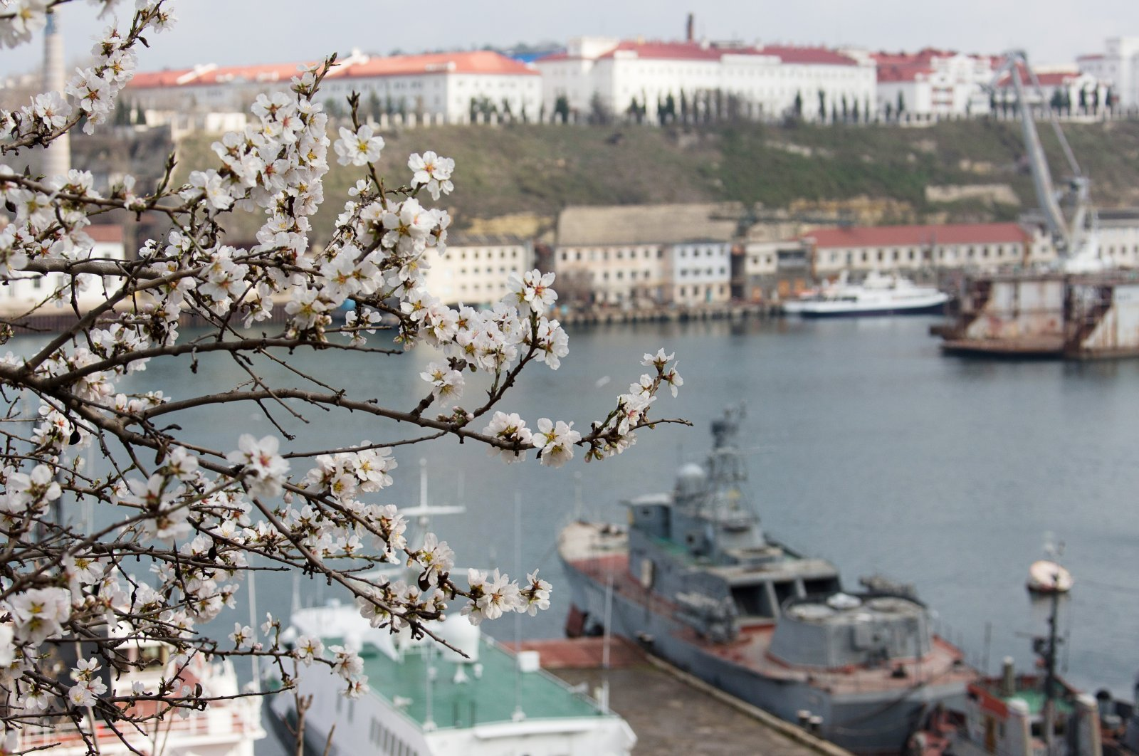 An almond tree in blossom against the background of Sevastopol's Yuzhnaya Bay, Crimea, March 11, 2020. (Photo by Getty Images)