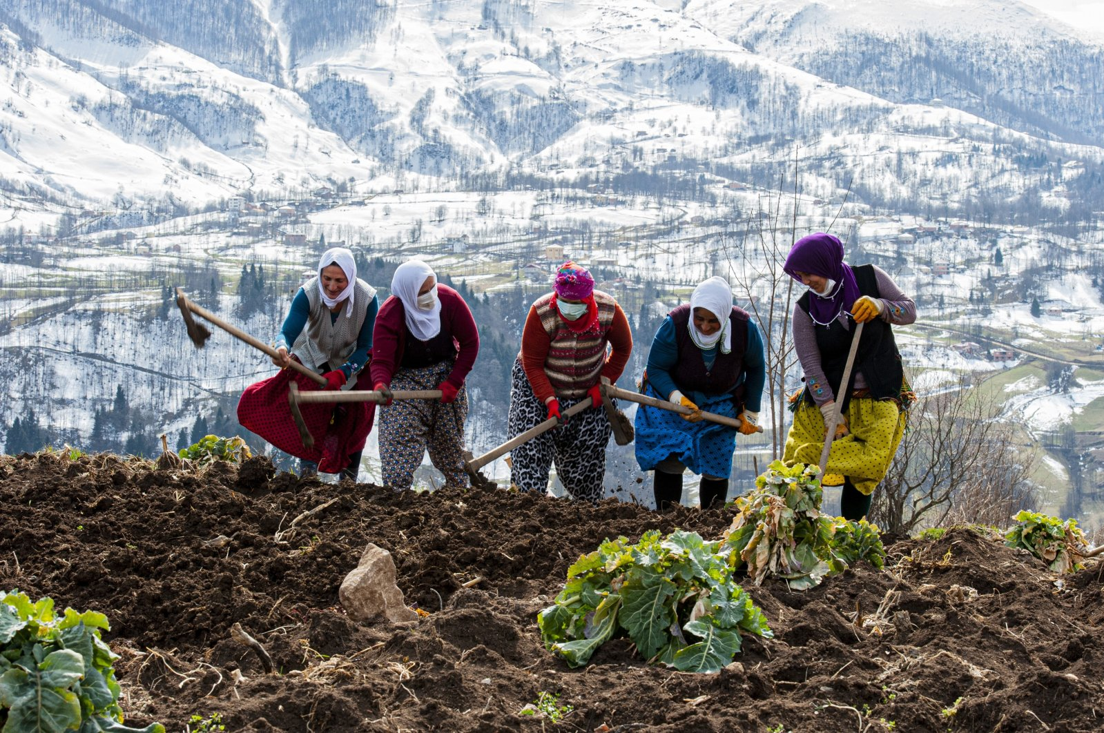 Women work in a field in Trabzon, northern Turkey, March 7, 2021. (DHA PHOTO)