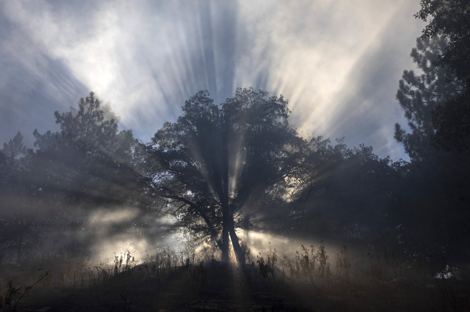 Sun rays filter through a smoky forest at the Apple Fire as an excessive heat warning continues, Cherry Valley, California, U.S., Aug. 1, 2020. (Photo by Getty Images)