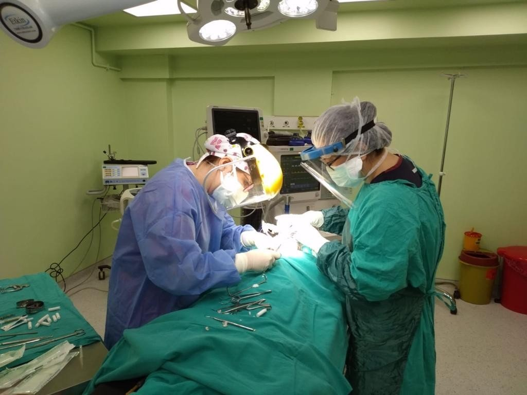 Two dentists from Muğla Sıtkı Koçman University's Faculty of Dentistry carry out surgery after a protocol with Menteşe Public Hospital, Muğla, southwestern Turkey, March 8, 2021. (IHA Photo)