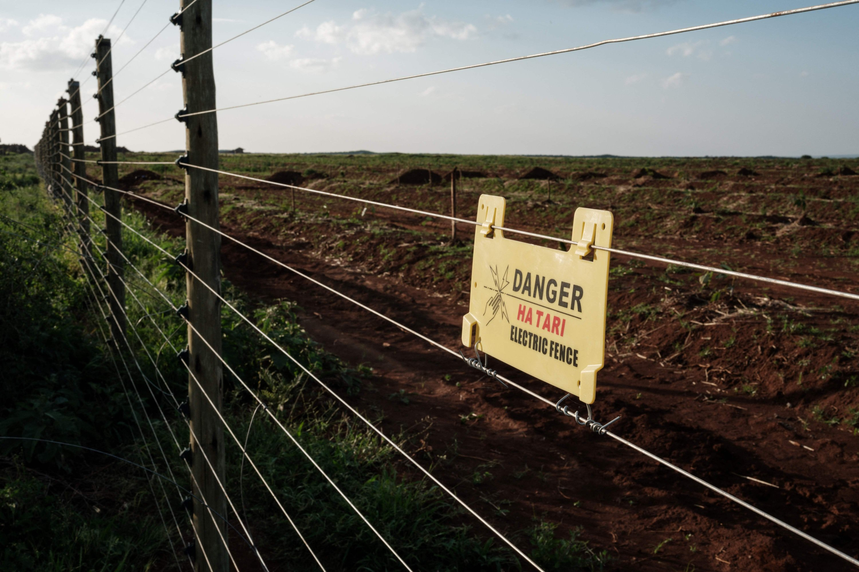 A general view of the electric fence at KiliAvo Fresh Ltd in Kimana, Kenya, on March 1, 2021. (AFP Photo)