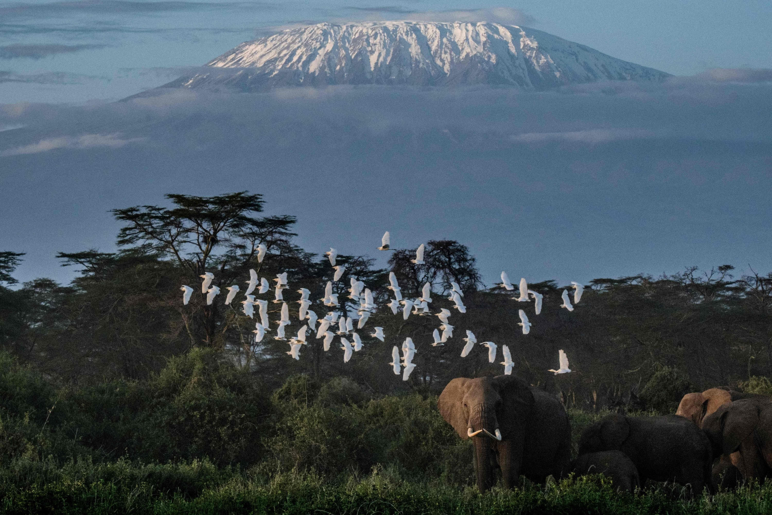 A general view of elephants grazing backdropped by snow-capped Mount Kilimanjaro at Kimana Sanctuary in Kimana, Kenya, March 2, 2021. (AFP Photo)