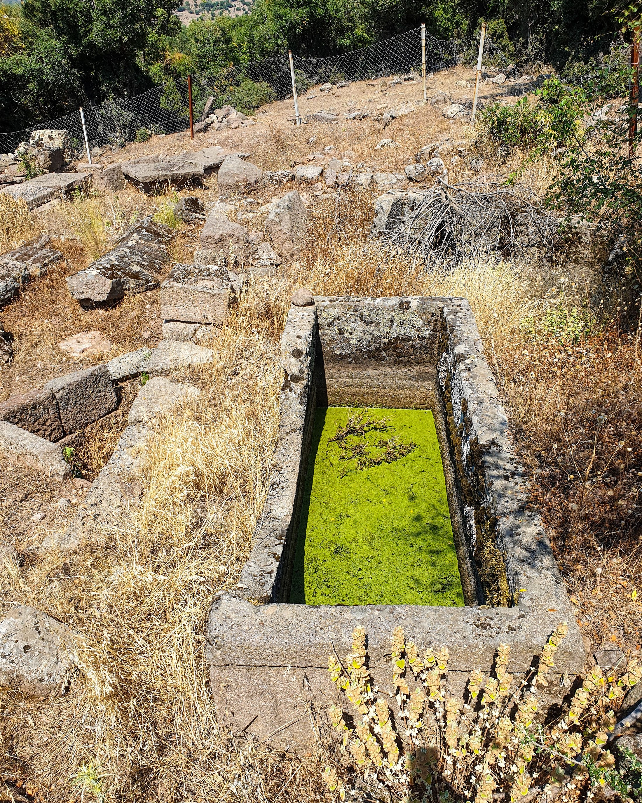 A sarcophagus filled with water at Aigai. (Photo by Argun Konuk)