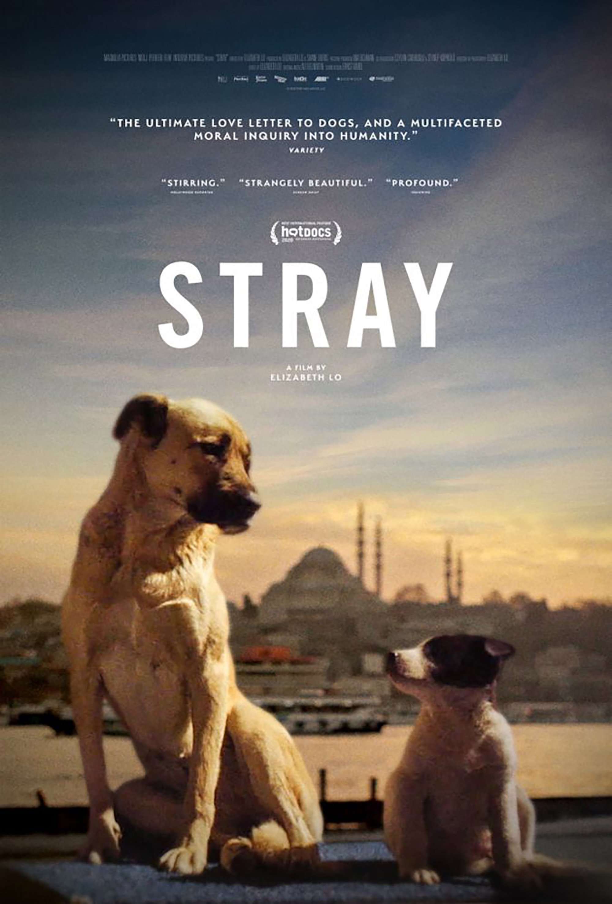 A poster for 'Stray,' directed by Elizabeth Lo.