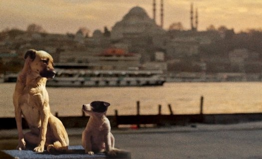 """A still shot shows two stray dogs in Istanbul from """"Stray,"""" directed by Elizabeth Lo."""