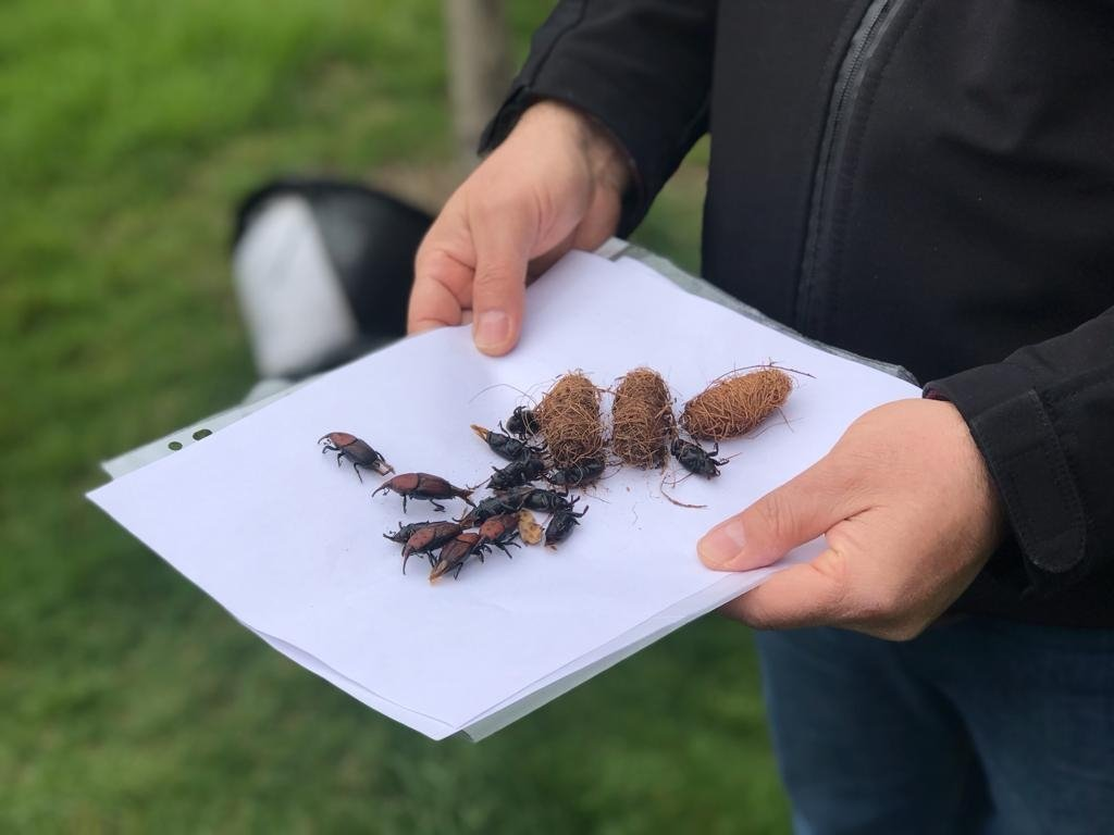 A view of the insects found in a tree in the Kartal district, Istanbul, Turkey, March 26, 2021. (DHA PHOTO)
