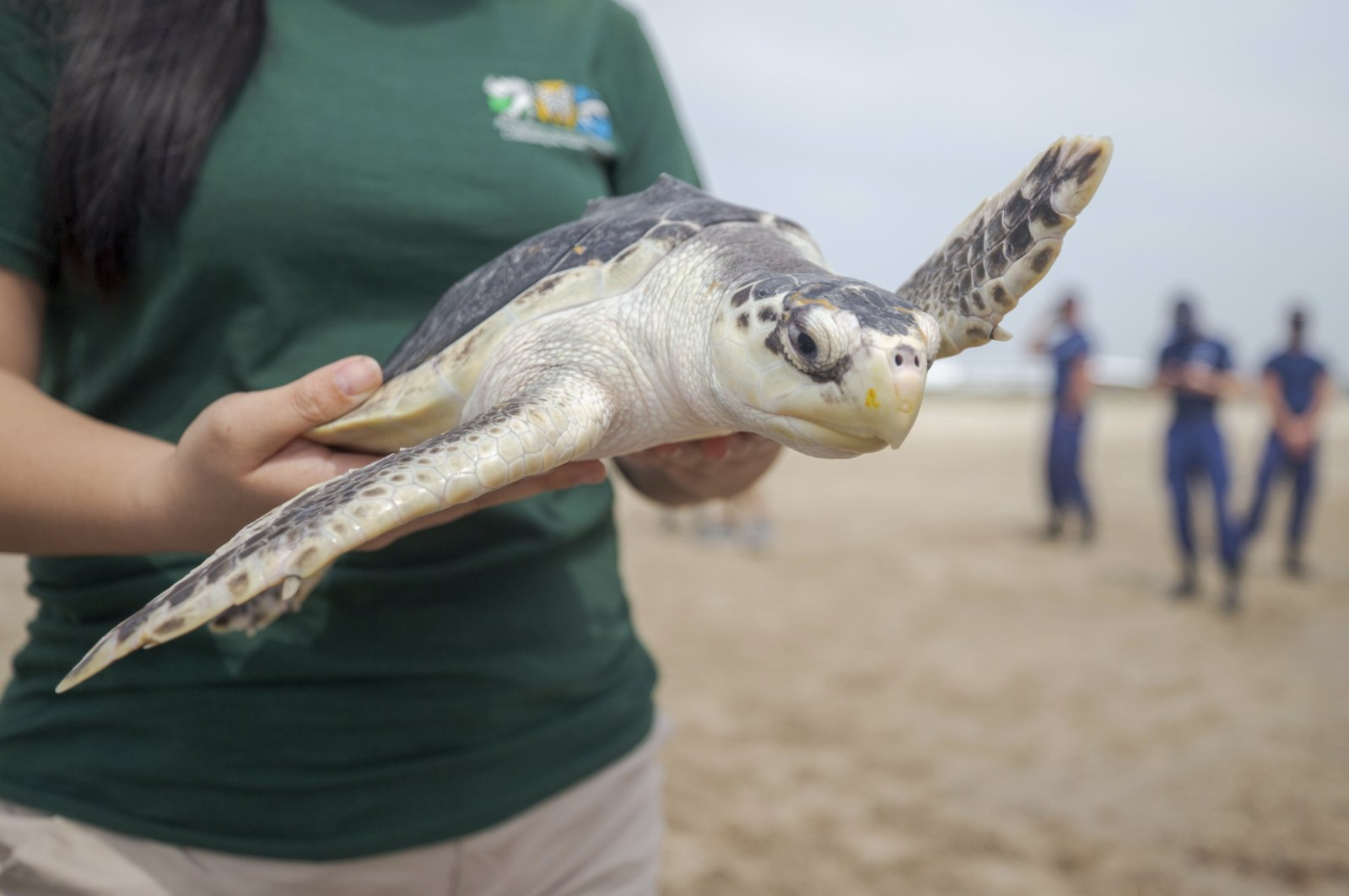 A volunteer holds a Kemp's Ridley sea turtle before releasing it into the Gulf of Mexico from the Grand Isle beach, Louisiana, U.S., March 15, 2021. (The Advocate via AP)