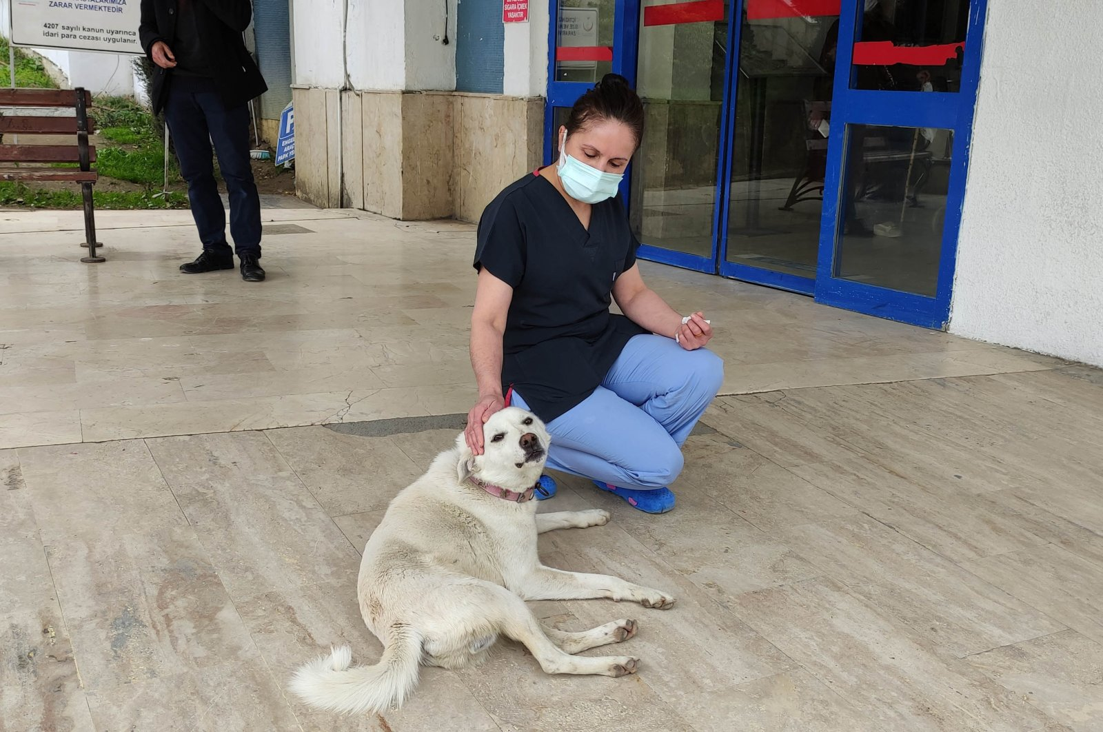 A hospital worker pets Pamuk, who is waiting at the entrance of a hospital for her owner to be discharged, in Ordu, northern Turkey, March 28, 2021. (DHA PHOTO)