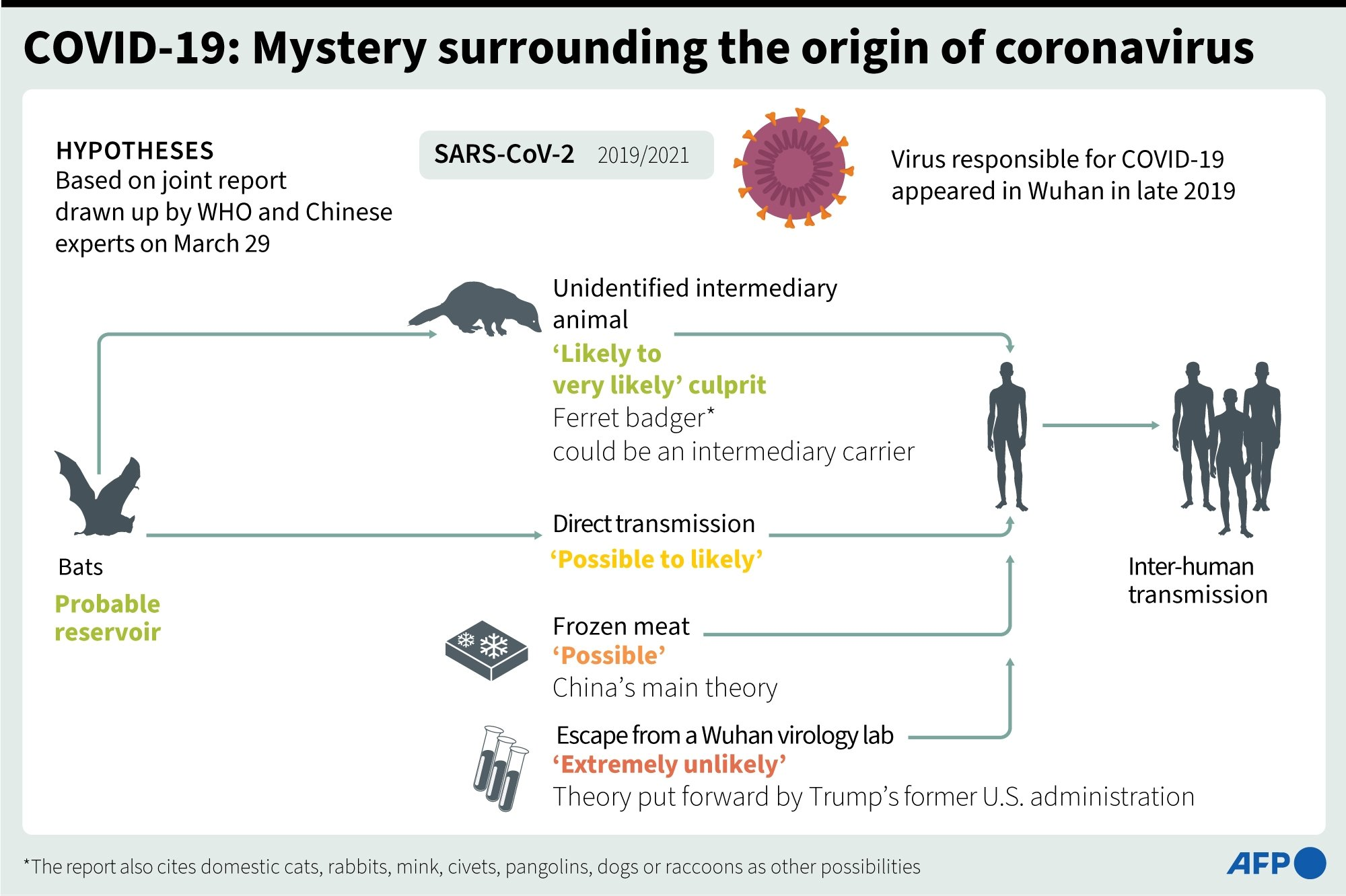 The WHO report details four possible sources of the coronavirus. (AFP Infographic)