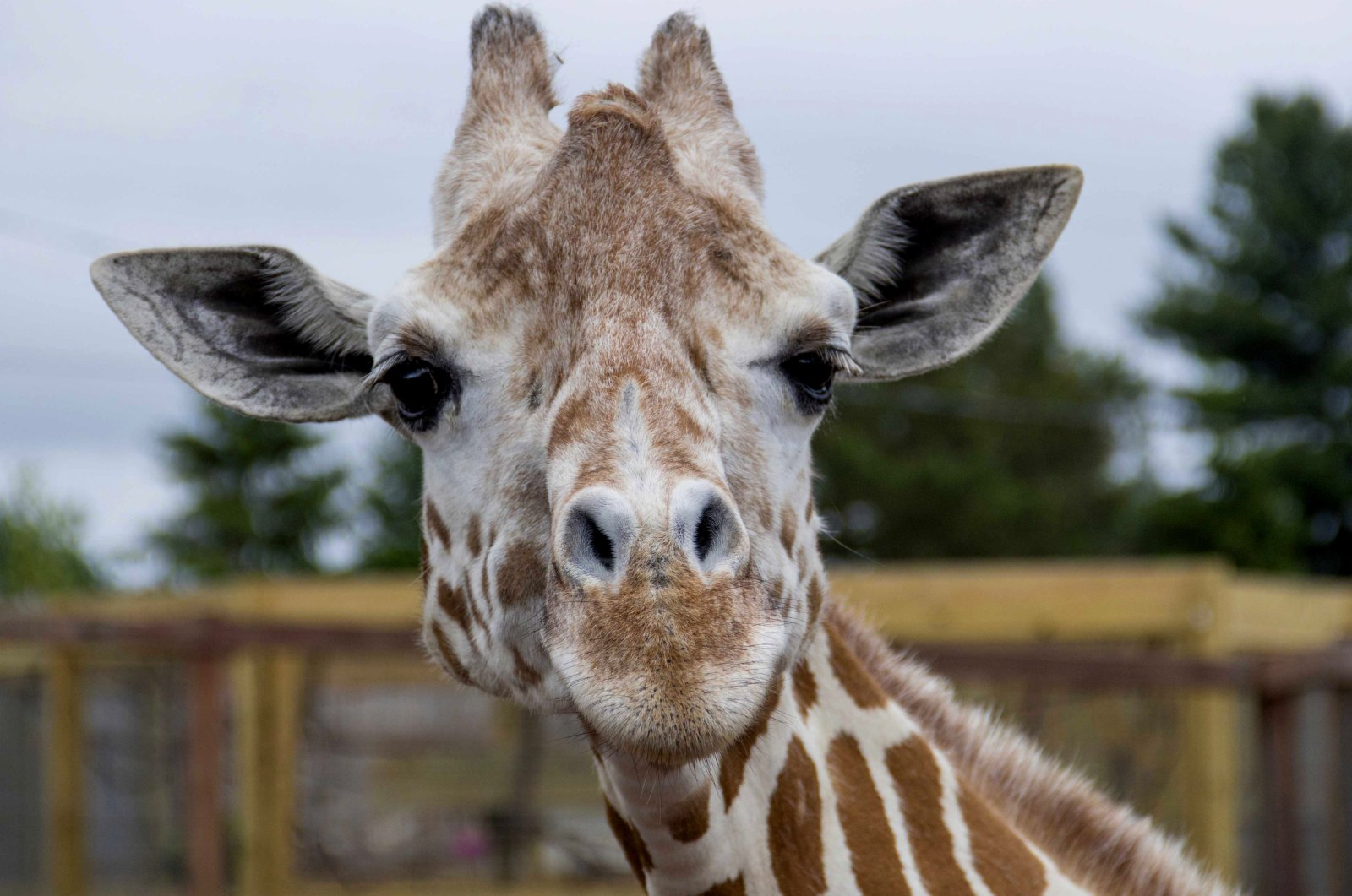 April at Animal Adventure Park in Harpursville, New York, U.S., in an undated photo provided by the zoo on June 3, 2018. (AP Photo)