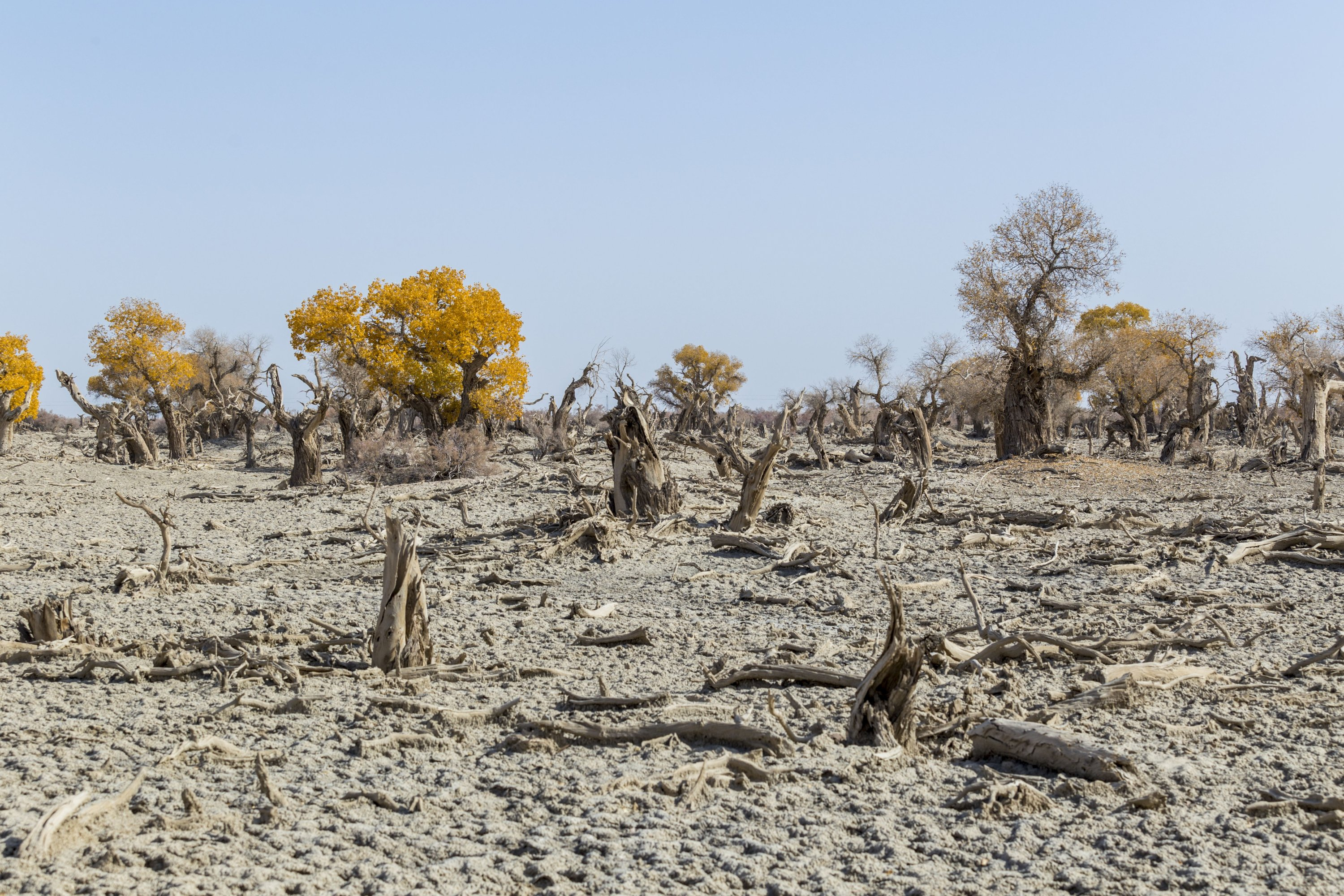 Drought, drought, drought: What mobilizes awareness?