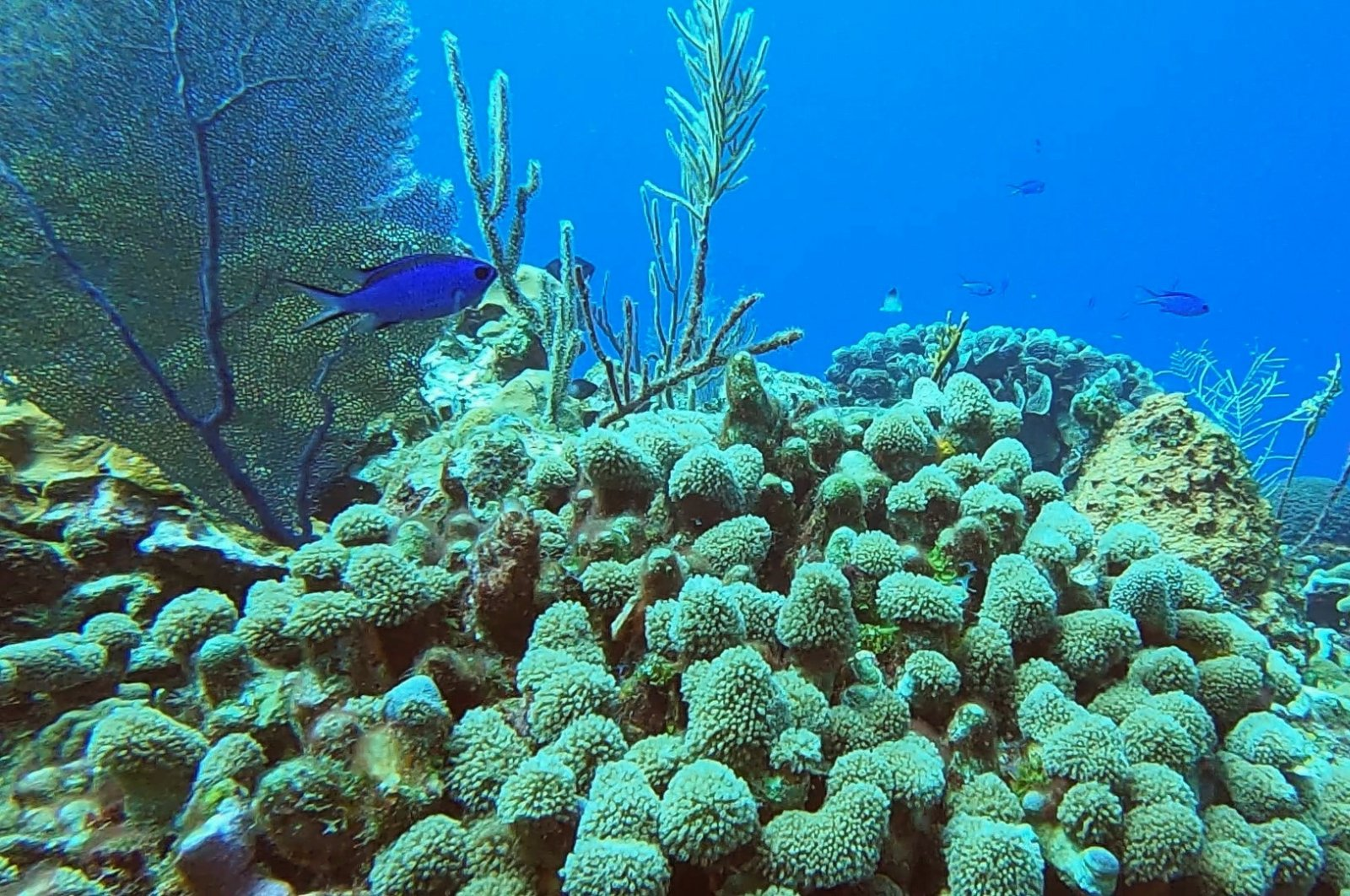 A view of a coral colony on the coast of Havana, Cuba, March 27, 2021. (REUTERS Photo)