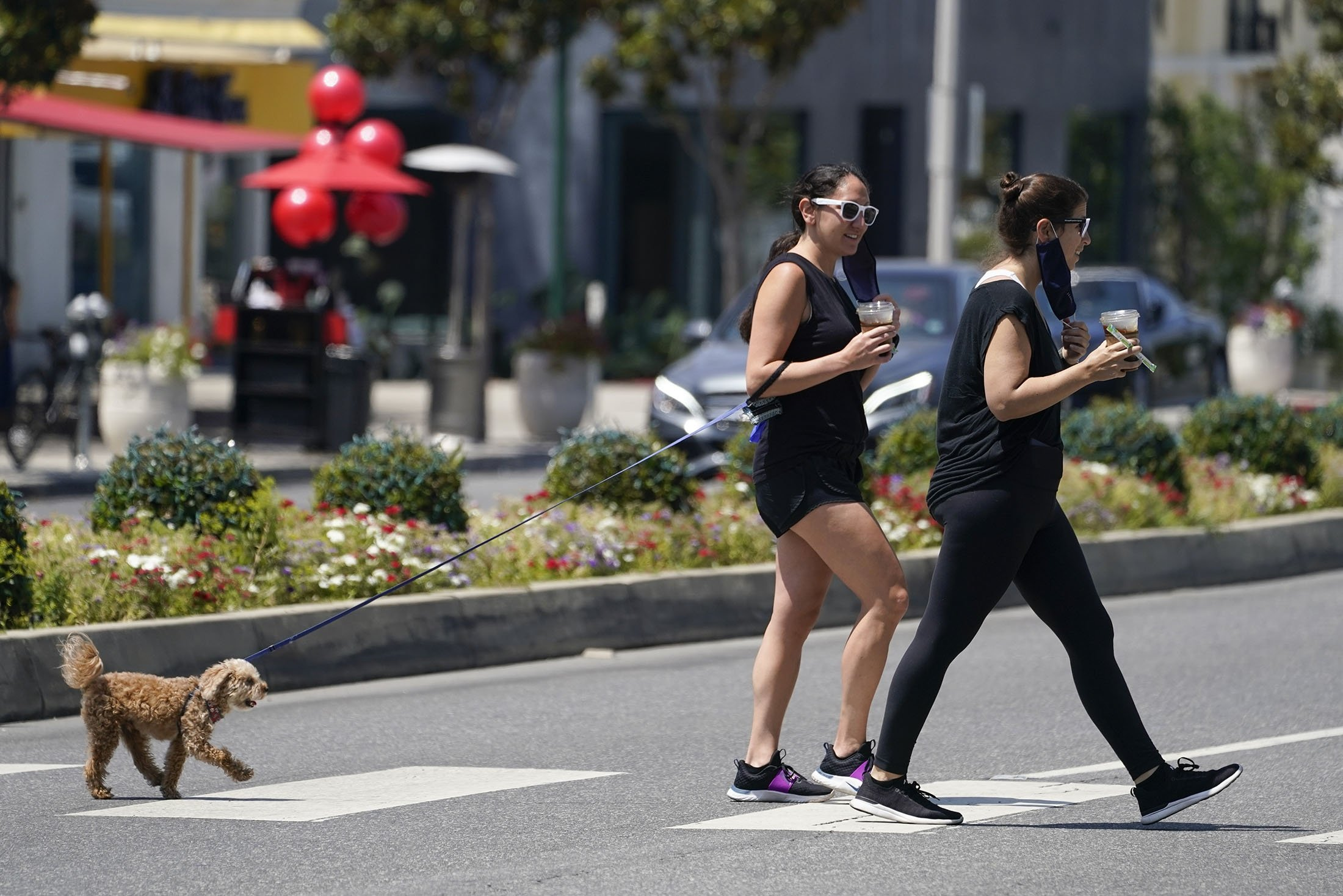 Stacy Shapiro and Sarah Shapiro put on masks while walking their dog, Boker, on Sunset Blvd, West Hollywood, California, U.S., July 2, 2020. (AP Photo)