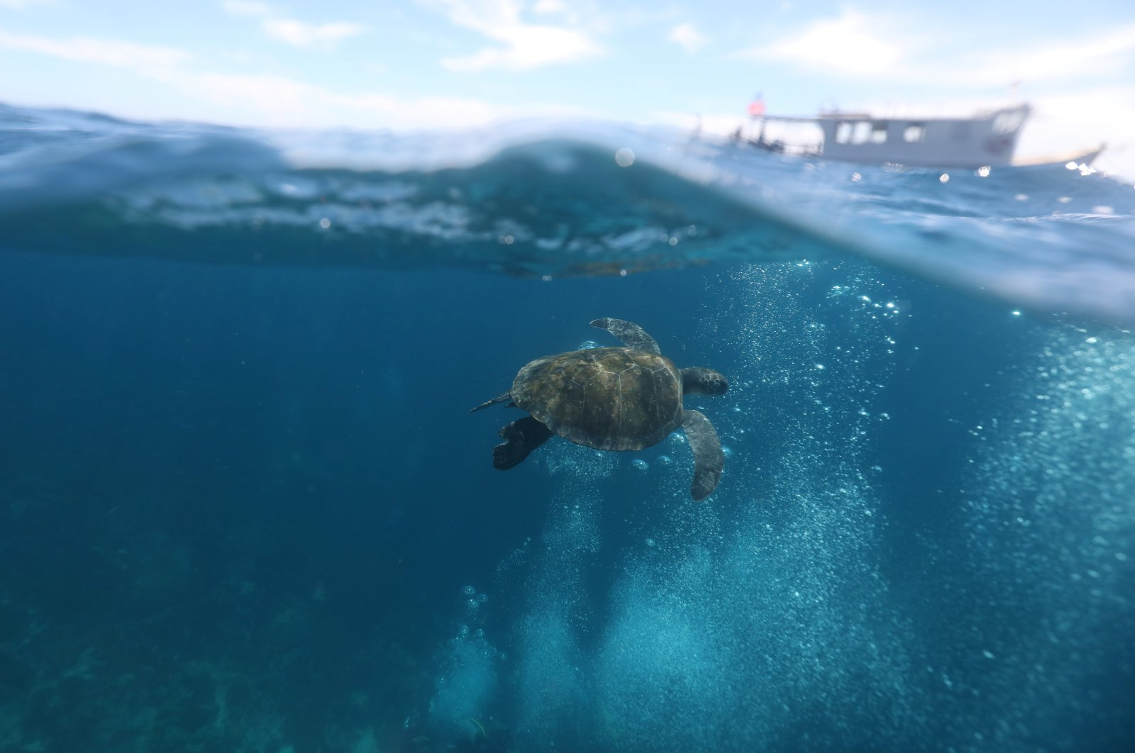 A turtle swims after an ocean cleaning by Sea Shepherd NGO volunteers to remove garbage at Ancora island in Buzios, Rio de Janeiro state, Brazil, March 14, 2021. (Reuters Photo)