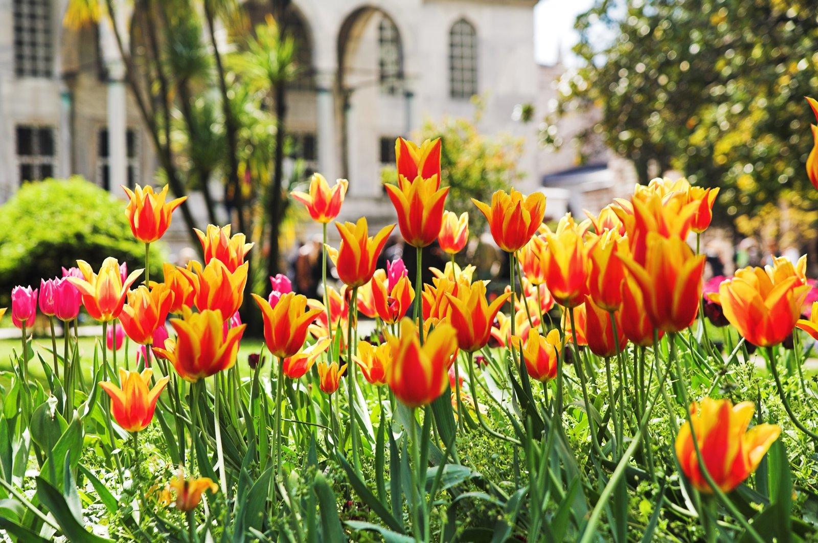 Tulips adorn a garden at the Topkapı Palace, Istanbul, Turkey. (Shutterstock Photo)