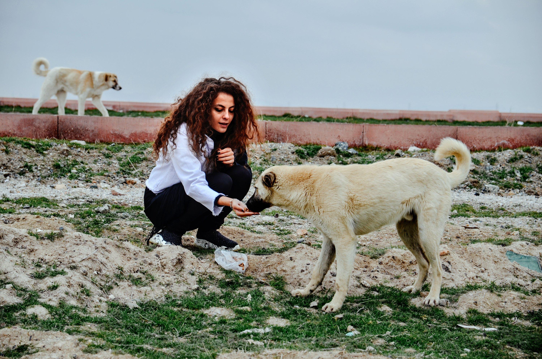 Painter Şeyma Kayan feeds a stray dog in central Konya, Turkey, April 13, 2021. (AA Photo)