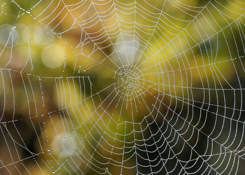 Drops of water slide down a spider's web during harvest at Chateau du Pavillon in Sainte-Croix-Du-Mont vineyard, France, Oct. 22, 2018. (Reuters Photo)