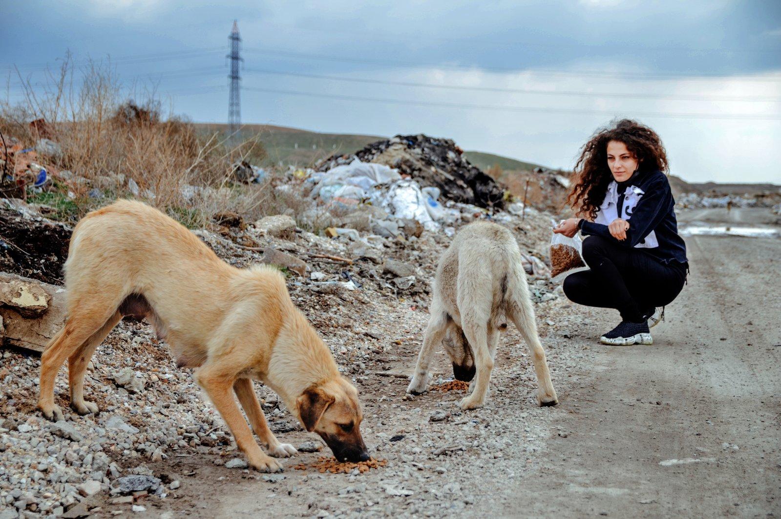Painter Şeyma Kayan feeds stray dogs in central Konya, Turkey, April 13, 2021. (AA Photo)