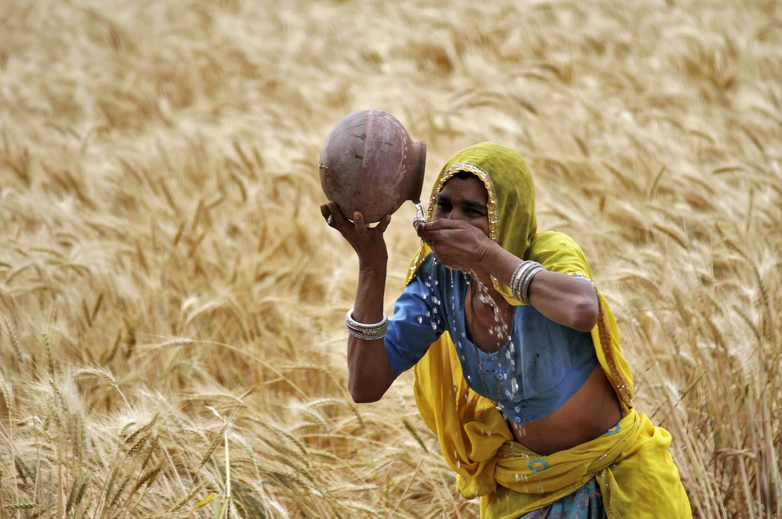 A female farmer drinks water from an earthen pot in a wheat field on the outskirts of Ajmer in the desert Indian state of Rajasthan, April 4, 2015. (REUTERS Photo)