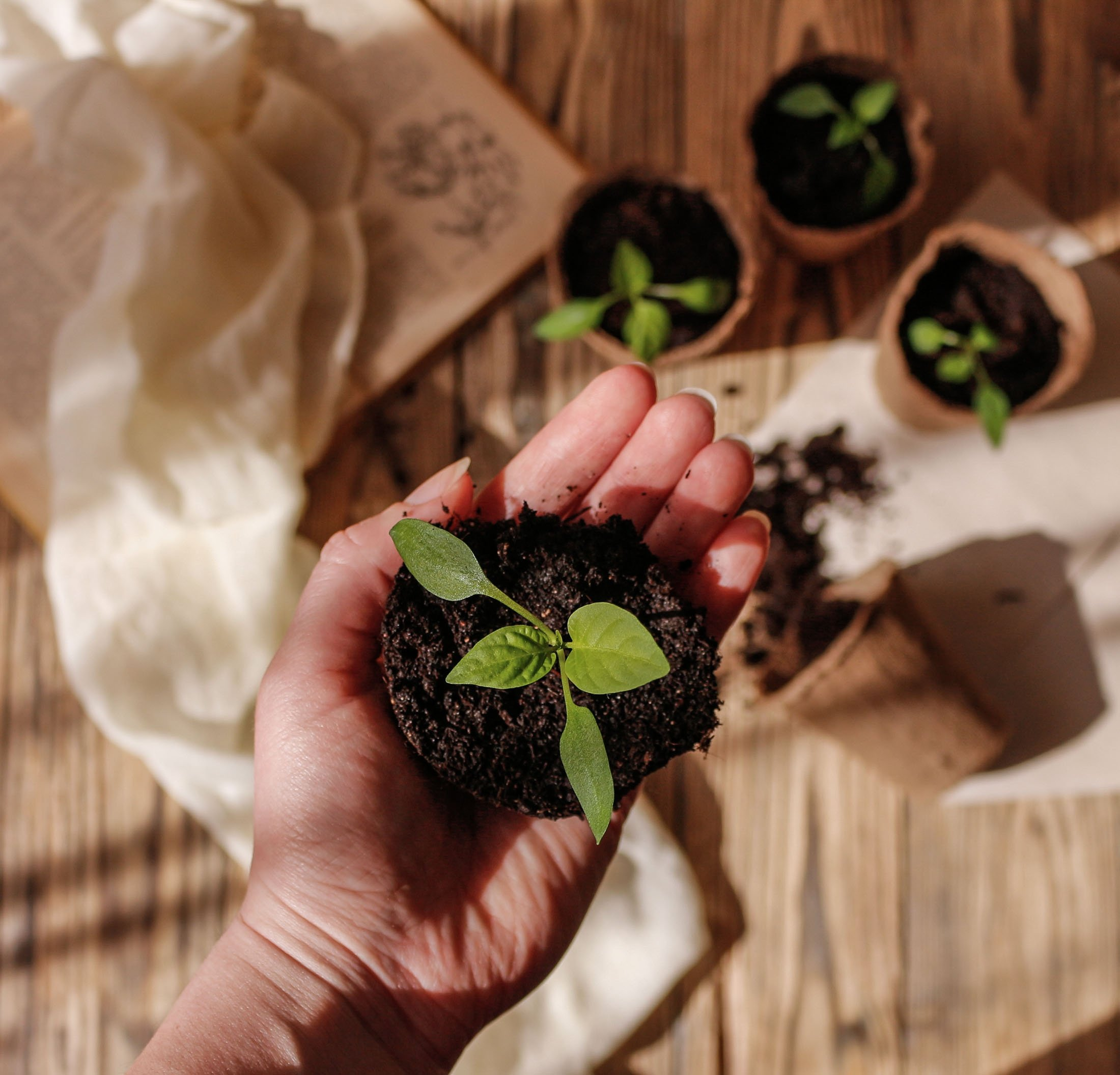 Planting trees and composting are some of the ways to help Earth heal. (Shutterstock Photo)