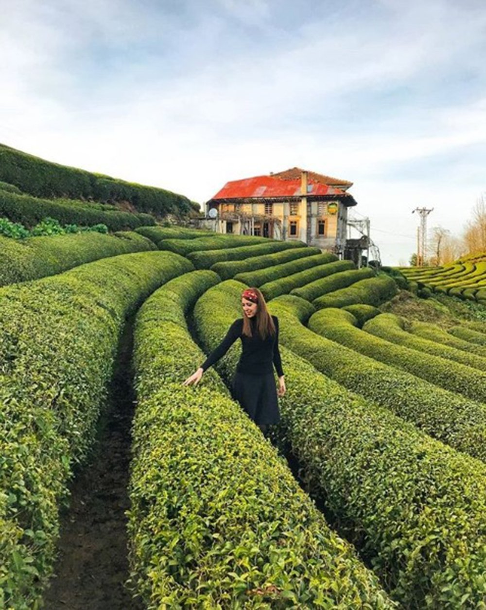 Turkish black tea is grown in the eastern Black Sea region, in Rize province in particular. (DHA Photo)