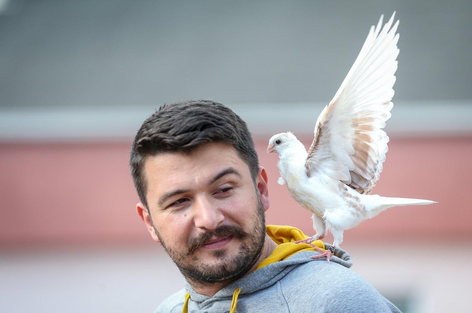 Nature photographer Alper Tüydeş is seen with his pigeon, Zibidi, Bursa, Turkey, April 20, 2021. (AA Photo)