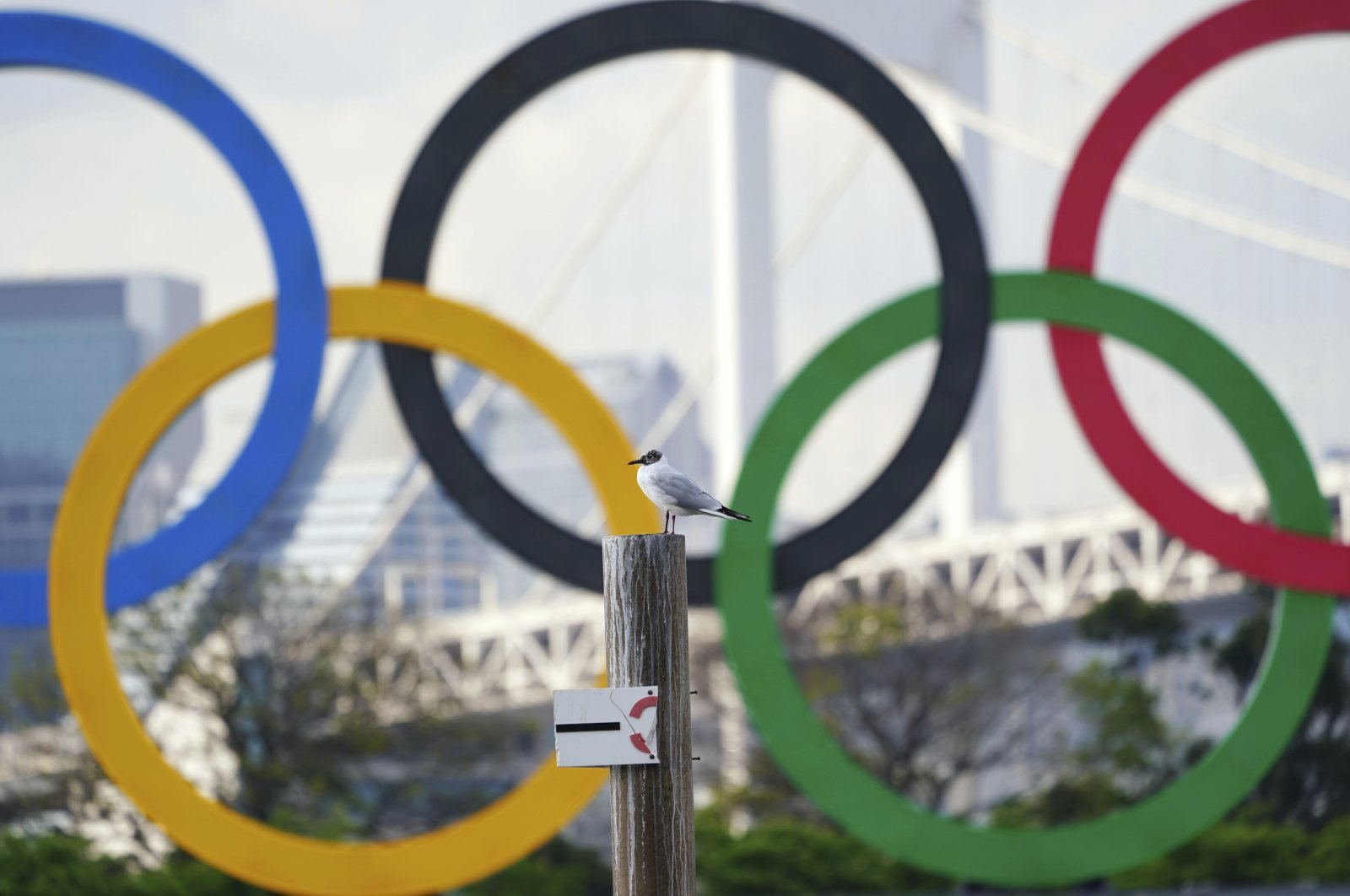A bird rests with a backdrop of the Olympic rings floating in the water in the Odaiba section, Tokyo, Japan, April 8, 2021 (AP Photo)