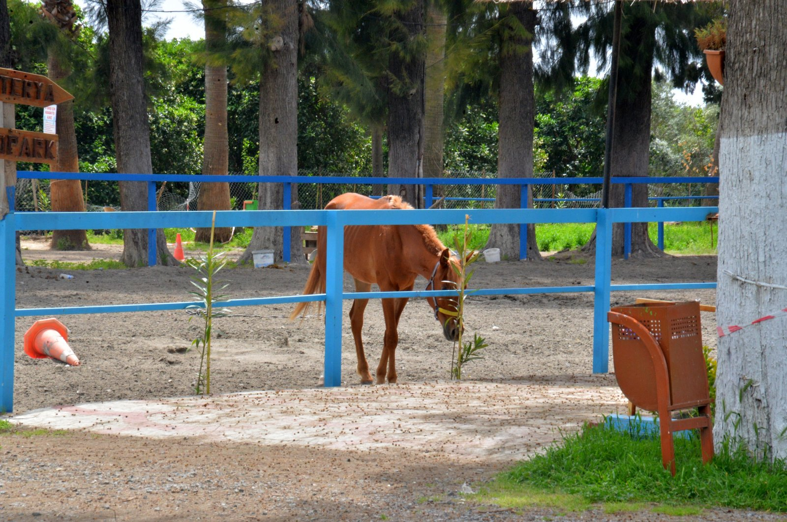 Ataturk Horse Farm, the place where the missing horses were allegedly sent, in Dörtyol, Hatay, April 21, 2021. (DHA Photo)