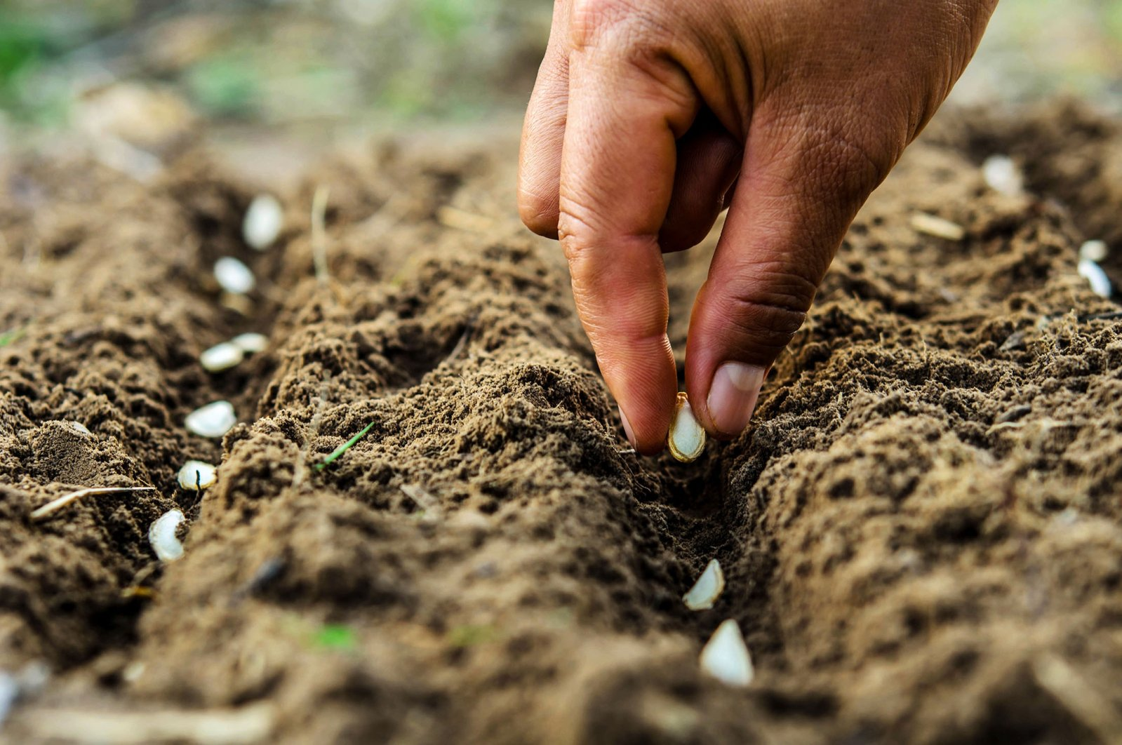 Come spring, you'll see many Turks plant pumpkin seeds, zucchinis and peas in their vegetable gardens.  (Shutterstock Photo)