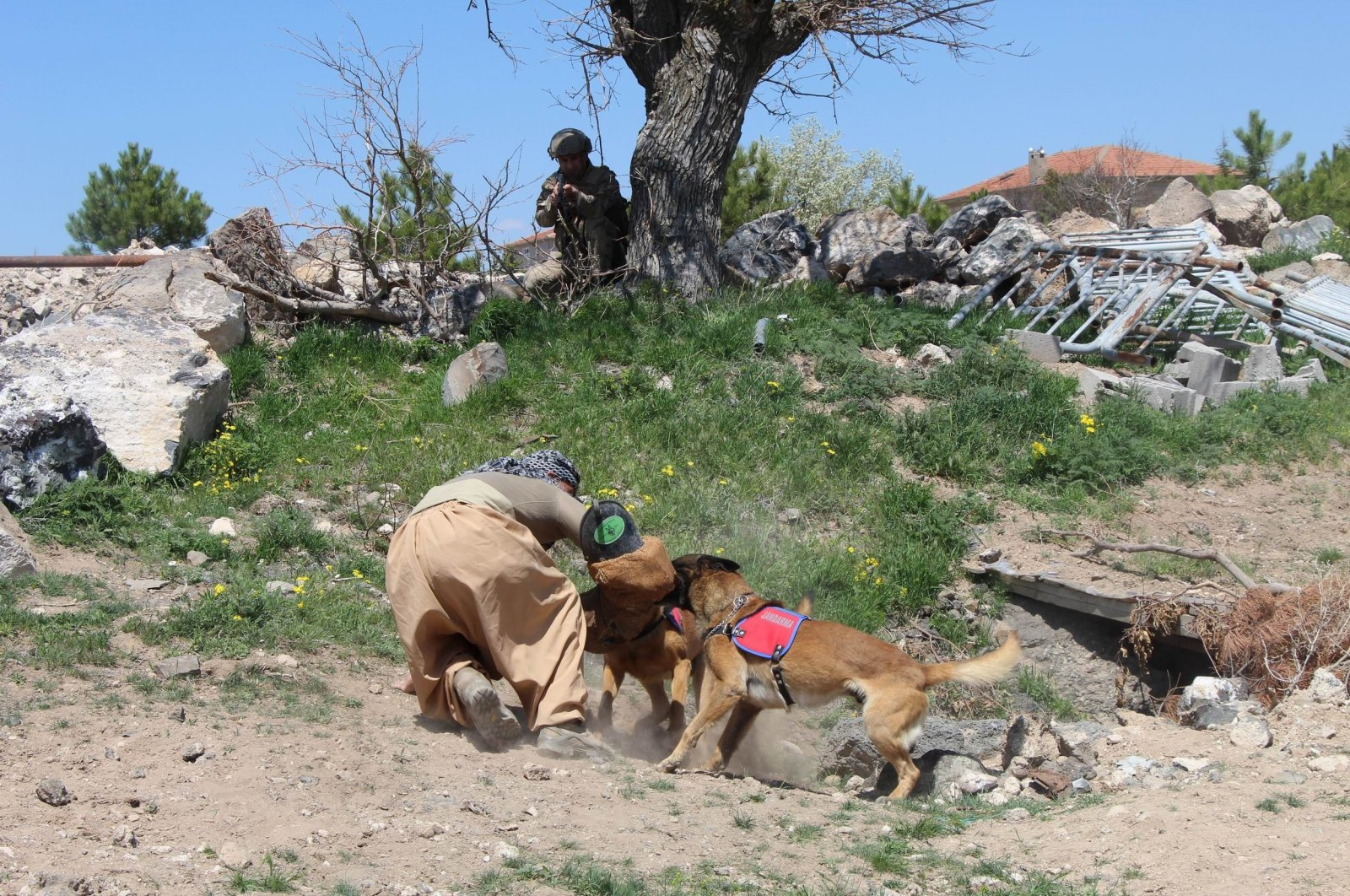 Trained dogs and gendarmerie forces are seen during a drill in central Turkey's Nevşehir province, April 22, 2021. (IHA Photo)