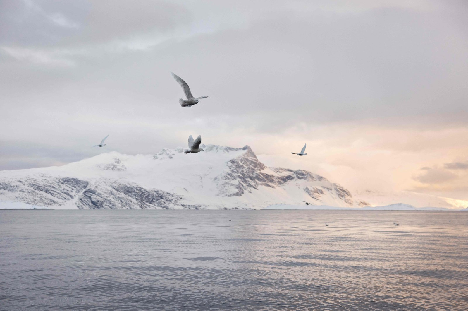 Seagulls fly near the boat of independent fisherman Lars Heilmann fishing for halibut in the Nuuk Fjord, near Nuuk, Greenland, March 20, 2021.  (AFP Photo)