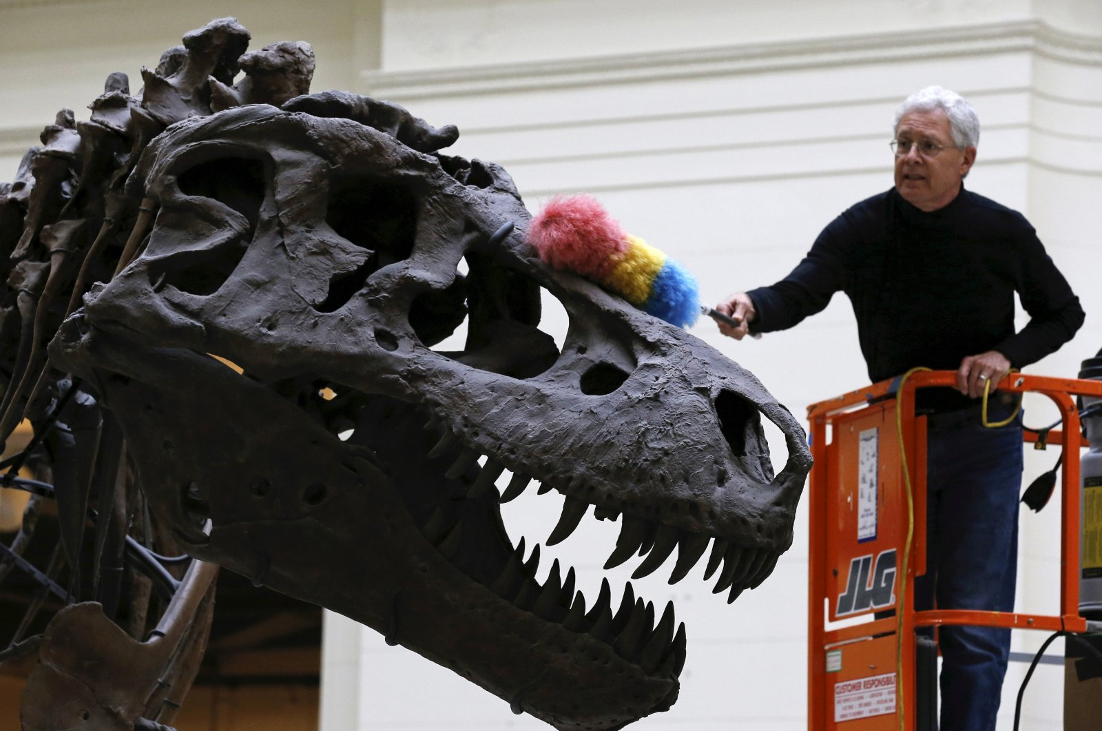 """A geologist uses a feather duster to clean the skeleton of a Tyrannosaurus rex known as """"Sue"""" at The Field Museum in Chicago, Illinois, U.S., June 11, 2015. (Reuters Photo)"""