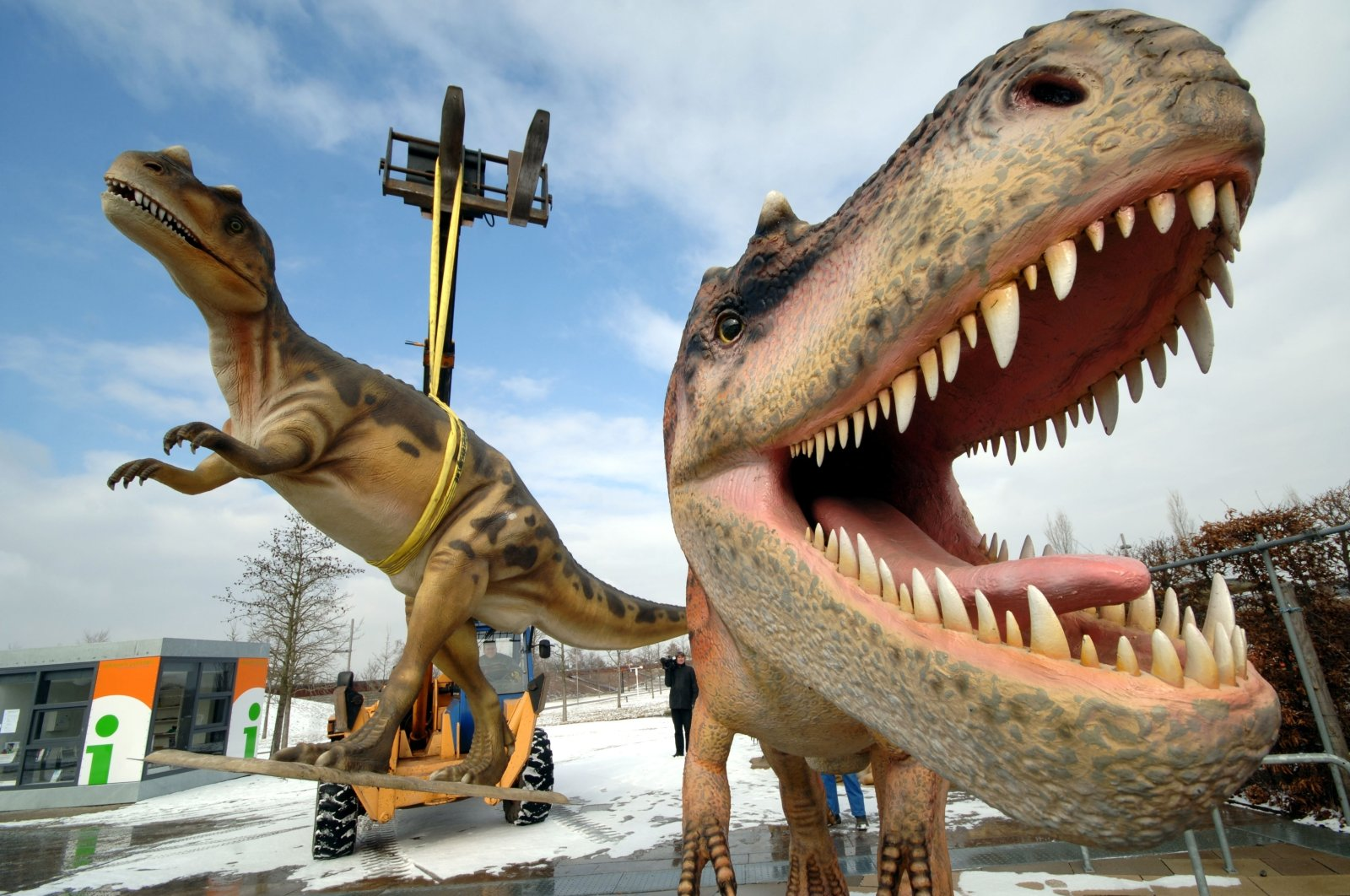 Life-sized Tyrannosaurus rex models are unloaded for a dinosaur exhibition in Potsdam, Germany, March 7, 2006. (AP Photo)