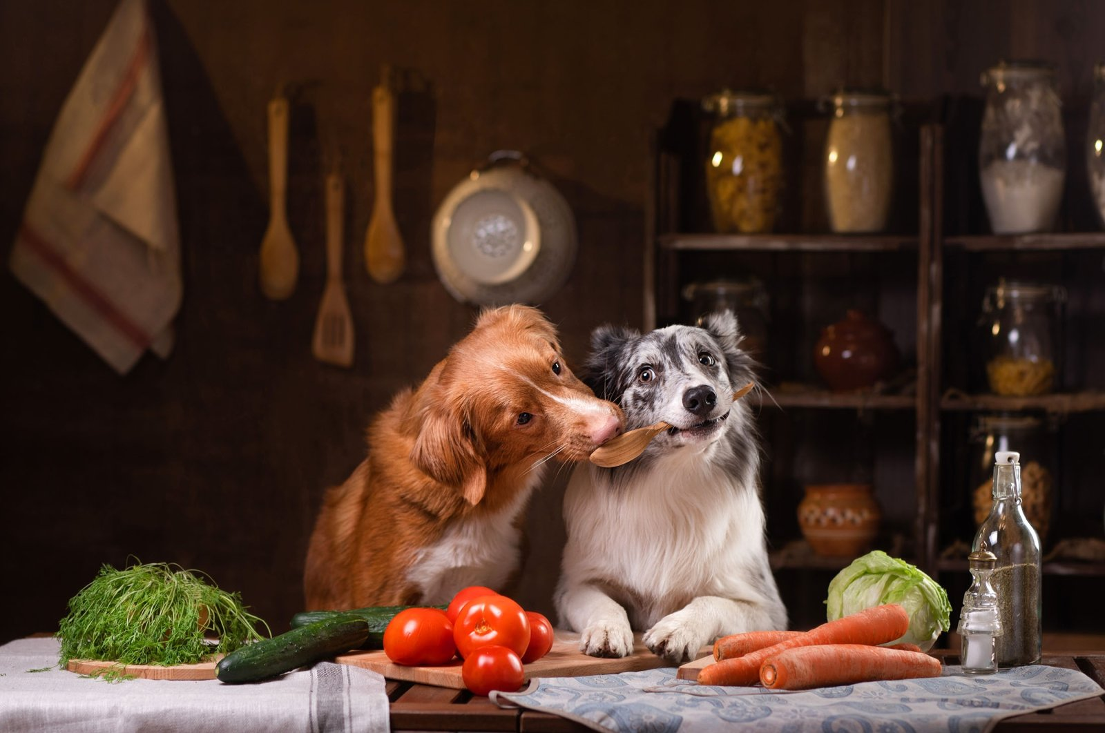 However enticing some foods may seem to canines, there are many that can be dangerous to their health. (Shutterstock Photo)