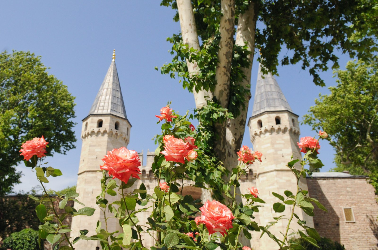 A view from Topkapı Palace with roses, Istanbul, Turkey.