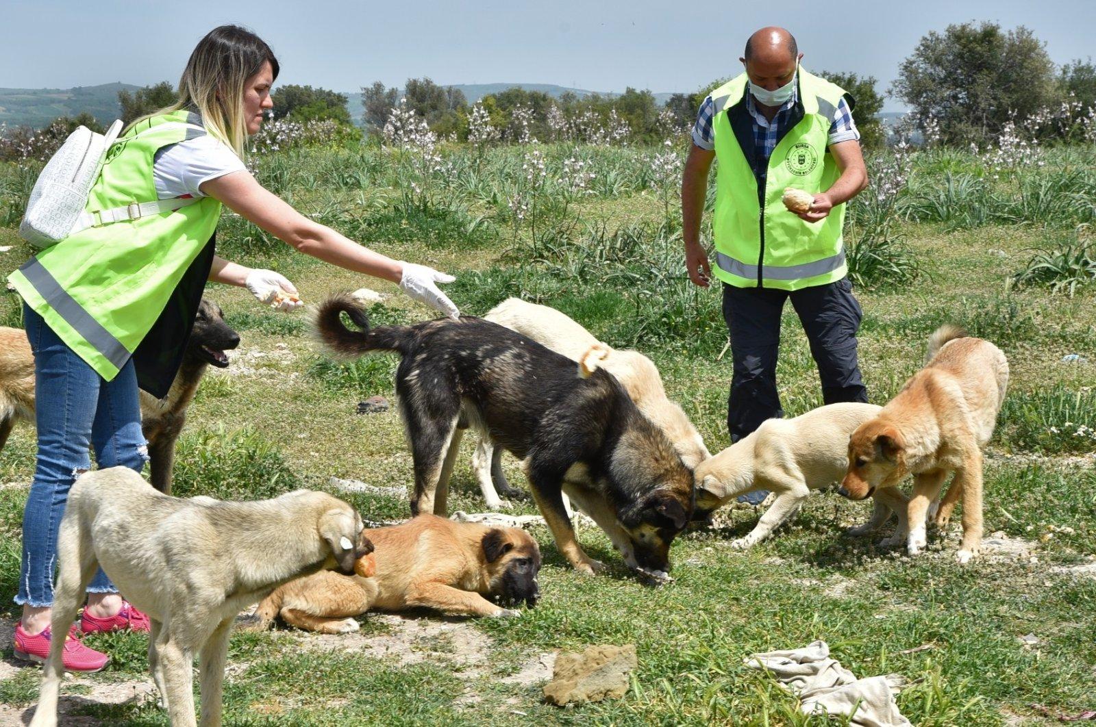 Animal lovers feed stray dogs in the northwestern Bursa province, Turkey, May 1, 2021 (IHA Photo)