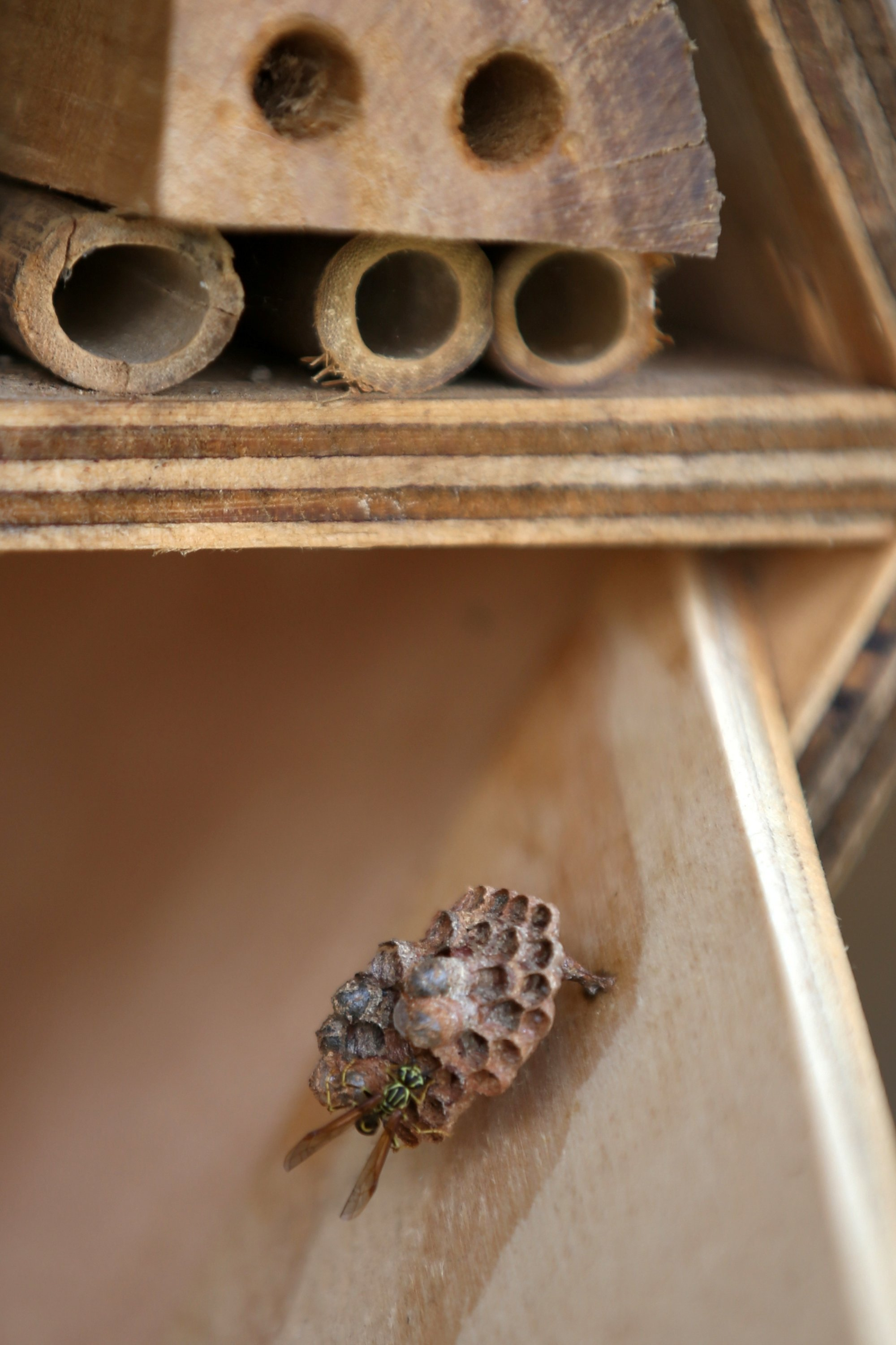 A wasp walks on the nest that's built inside a wooden hotel for solitary bees made by the Metropolitan Area of the Aburra Valley (AMVA) in Barbosa, Colombia, April 21, 2021. (Reuters Photo)